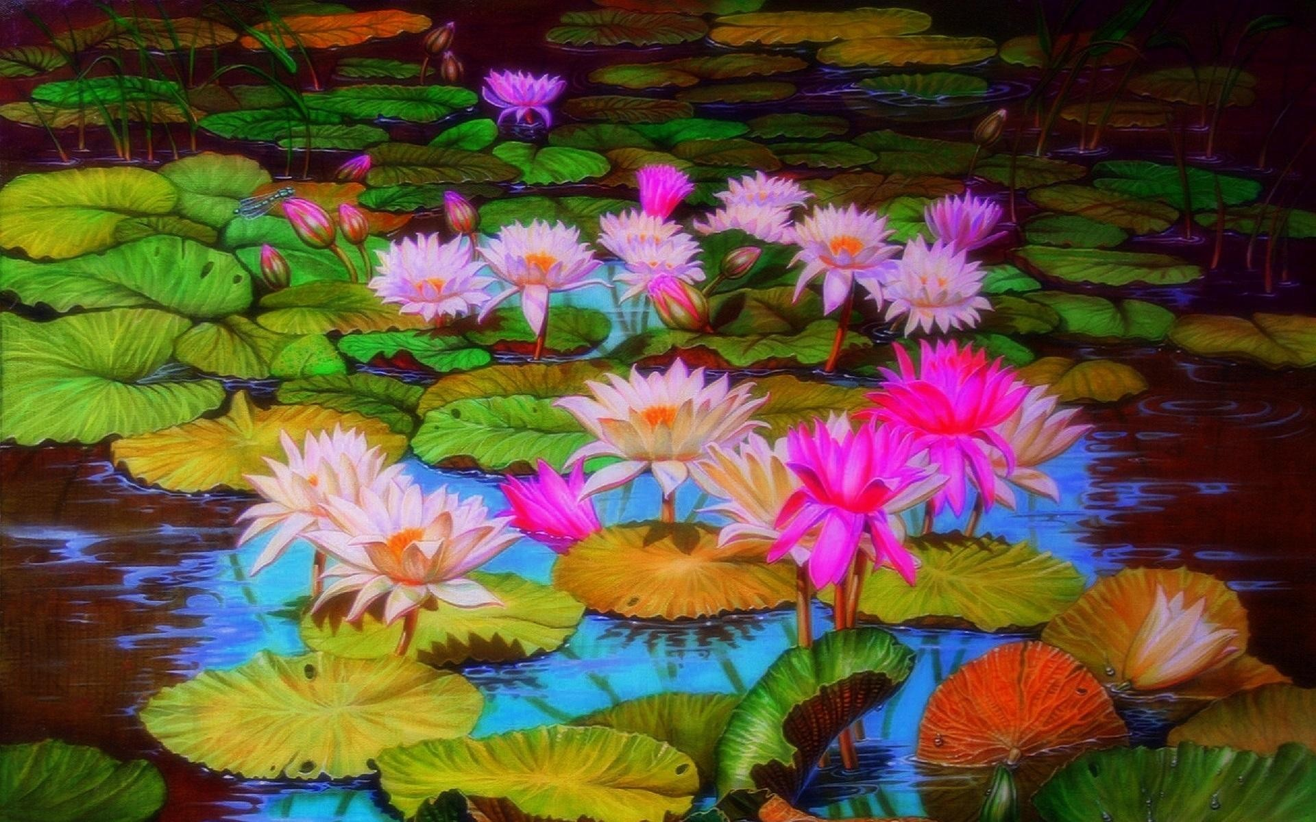 1920x1200 Pond with Lotus Flowers