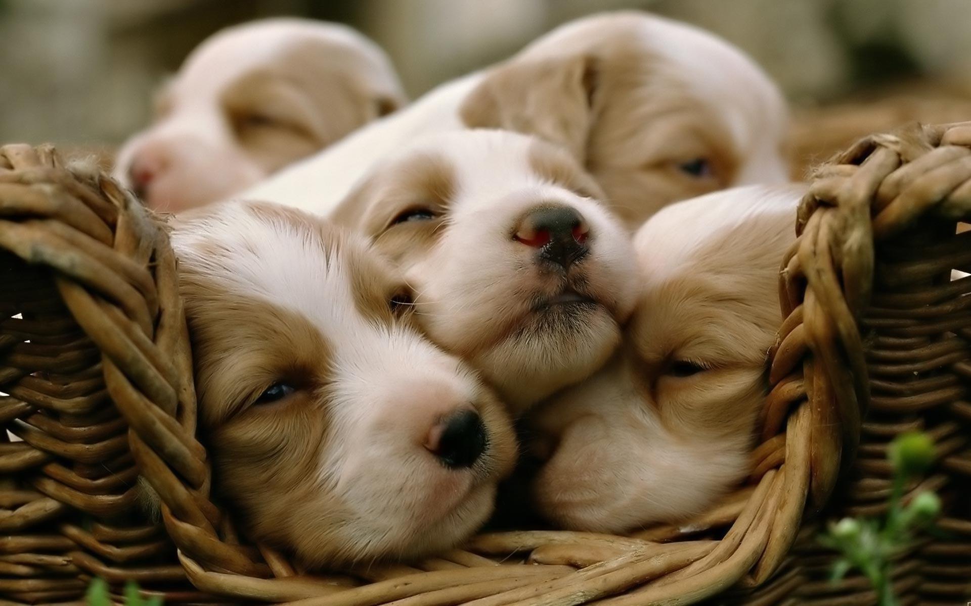 1920x1200 Cute Puppy Wallpaper Desktop 30118 Hd Wallpapers In