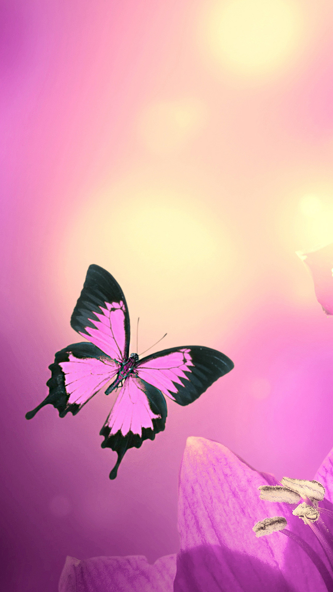 Pink Butterfly Wallpaper (69+ images)
