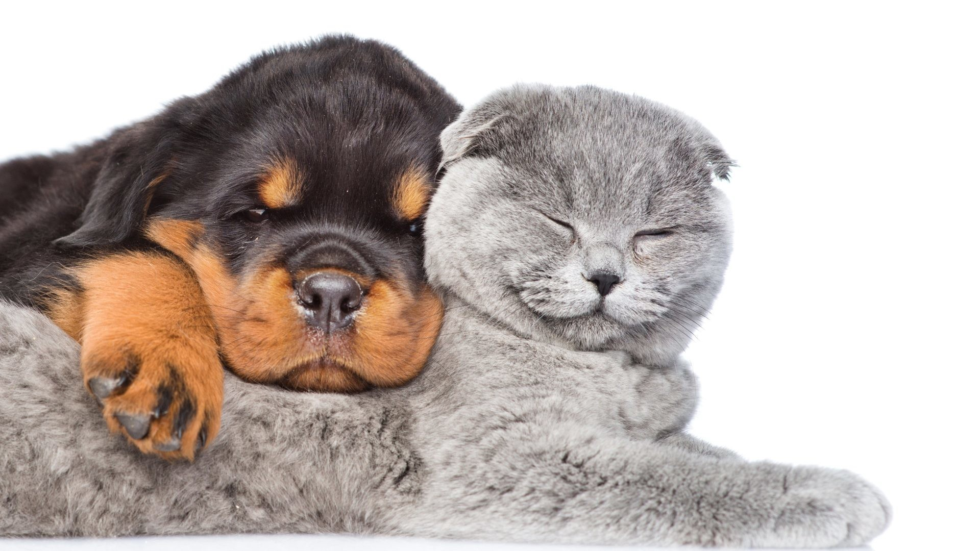 cute cats and dogs wallpaper (54+ images)