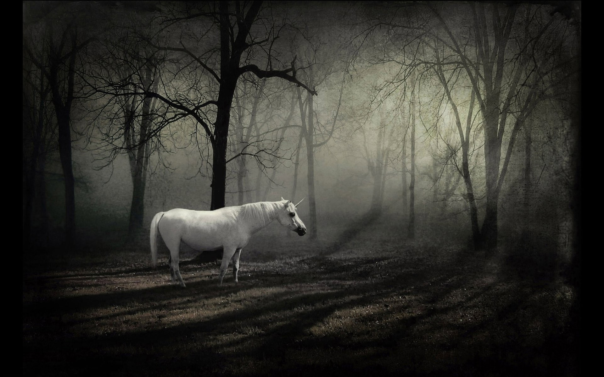 1920x1200 ... in the dark forest HD Wallpaper