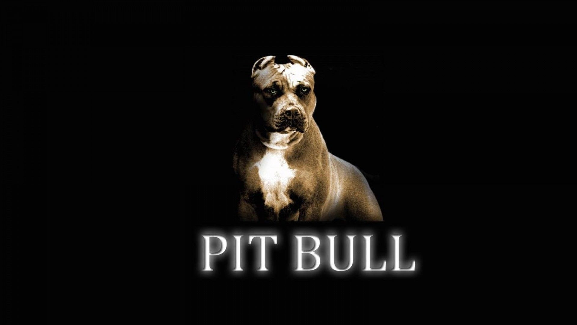 1920x1080 Pitbull Wallpaper, Bulls Wallpaper, Cute Puppy Wallpaper, Dog Wallpaper,  Wallpaper Pictures,