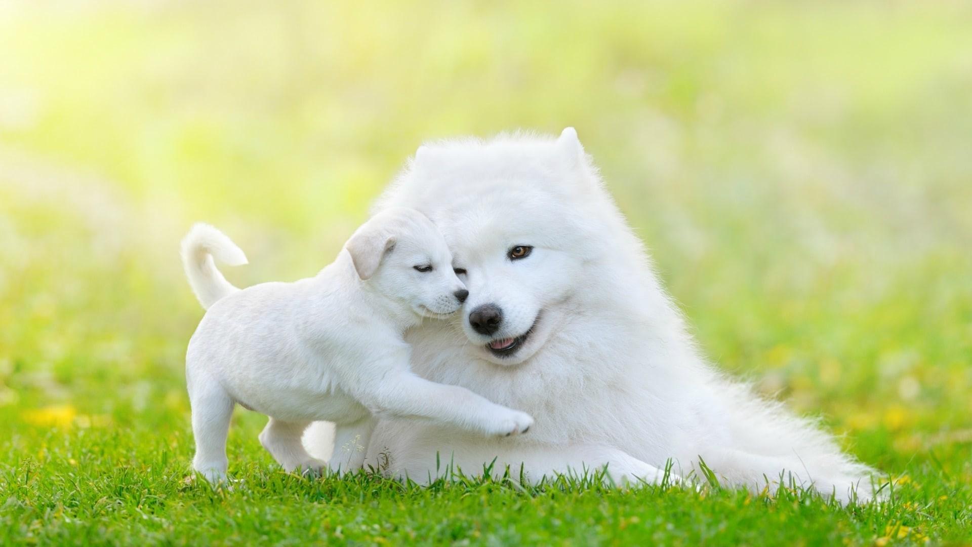 12 Best Hypoallergenic Dog Breeds   DoggOwner