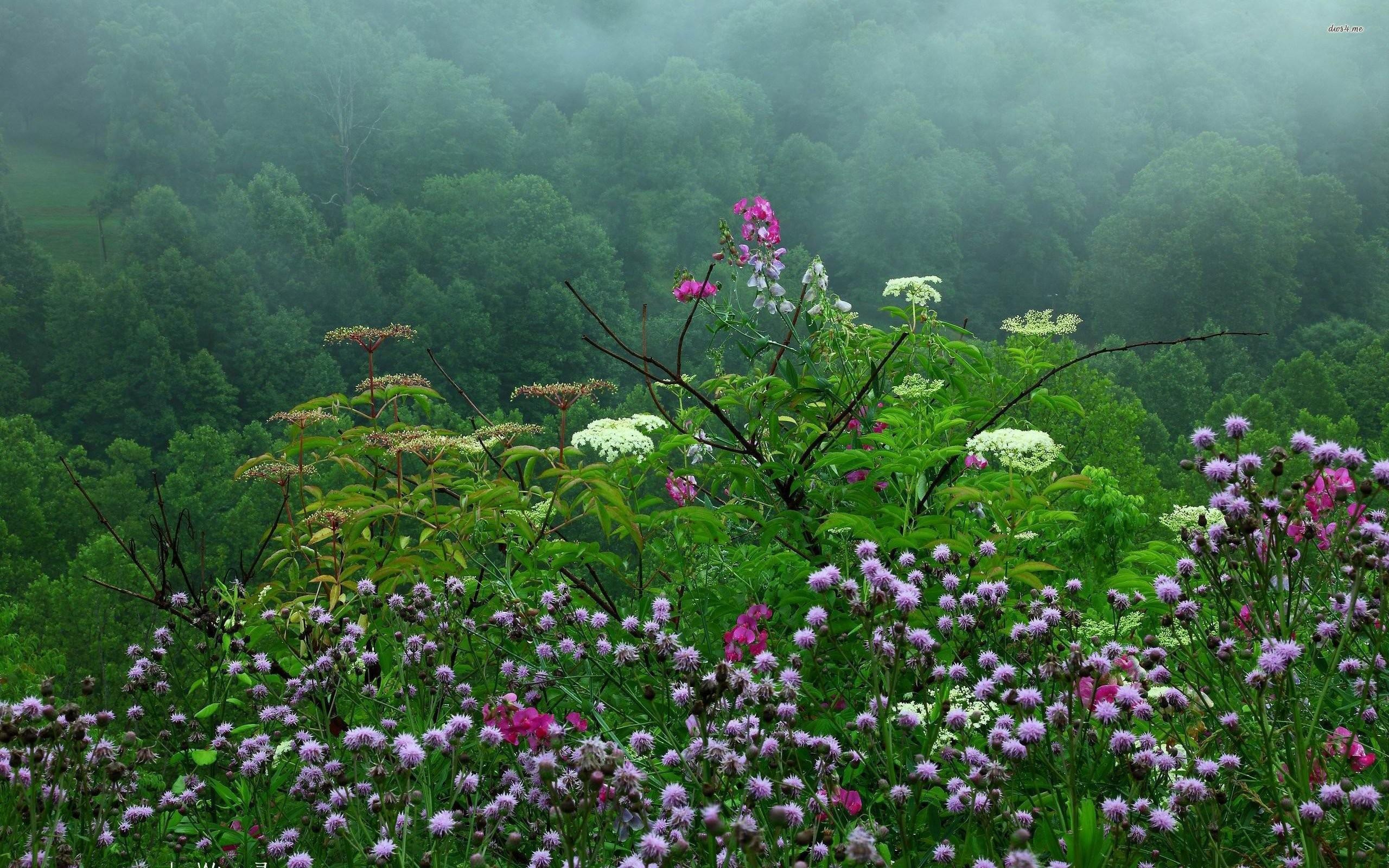 2560x1600 Raining Over The Wildflowers In Spring Nature HD Desktop Wallpaper Rain