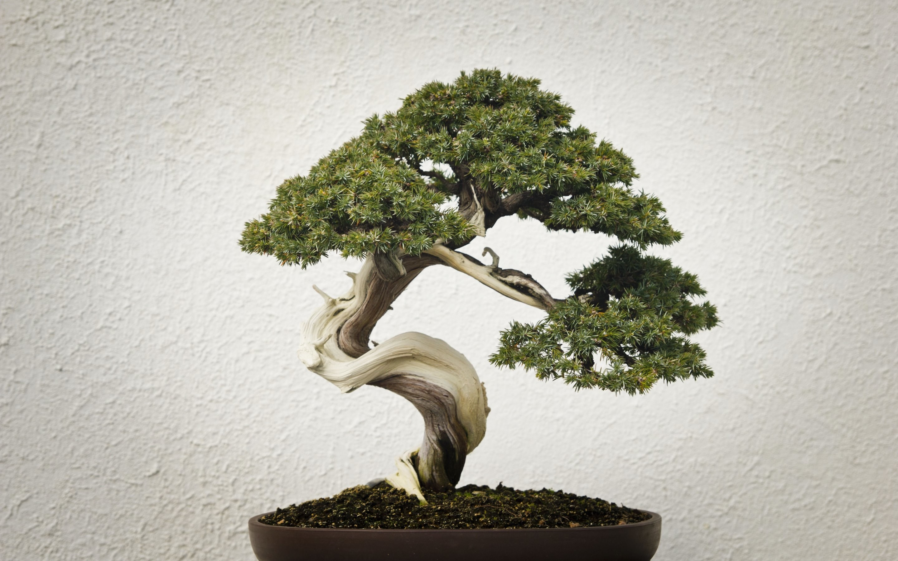 Bonsai Tree Wallpaper (67+ images)