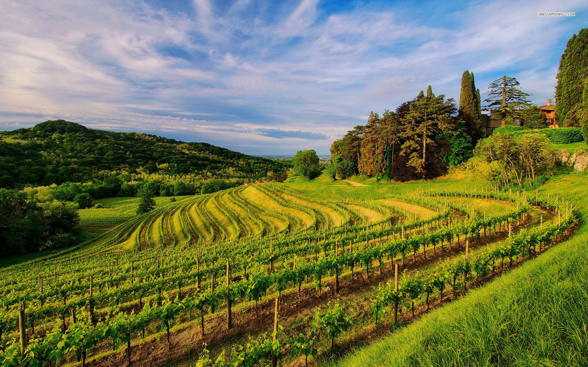 1920x1200 43 Widescreen HDQ Wallpapers of Vineyard for Windows and
