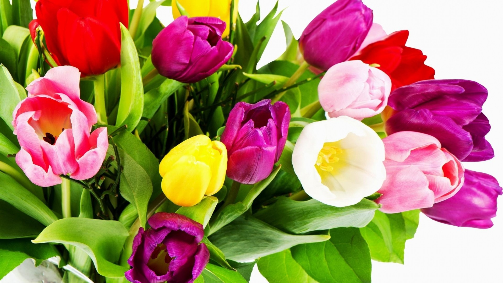 1920x1080  Wallpaper tulips, flowers, bouquet, bright, colorful, white  background
