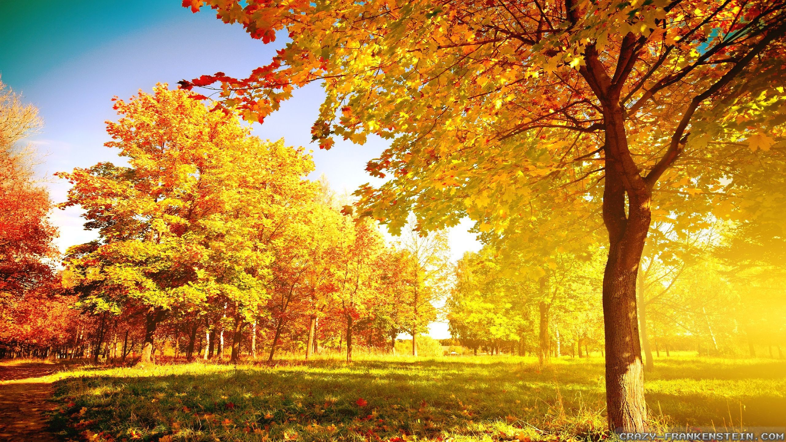 2560x1440 beautiful autumn tree wallpaper