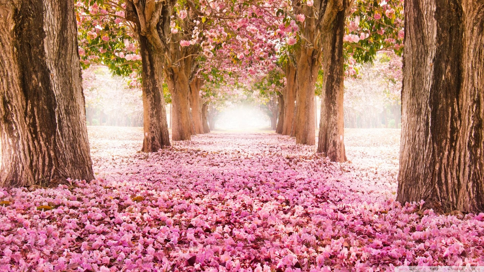 1920x1080 Wallpaper petals pink path romantic 1920 x 1080 full hd