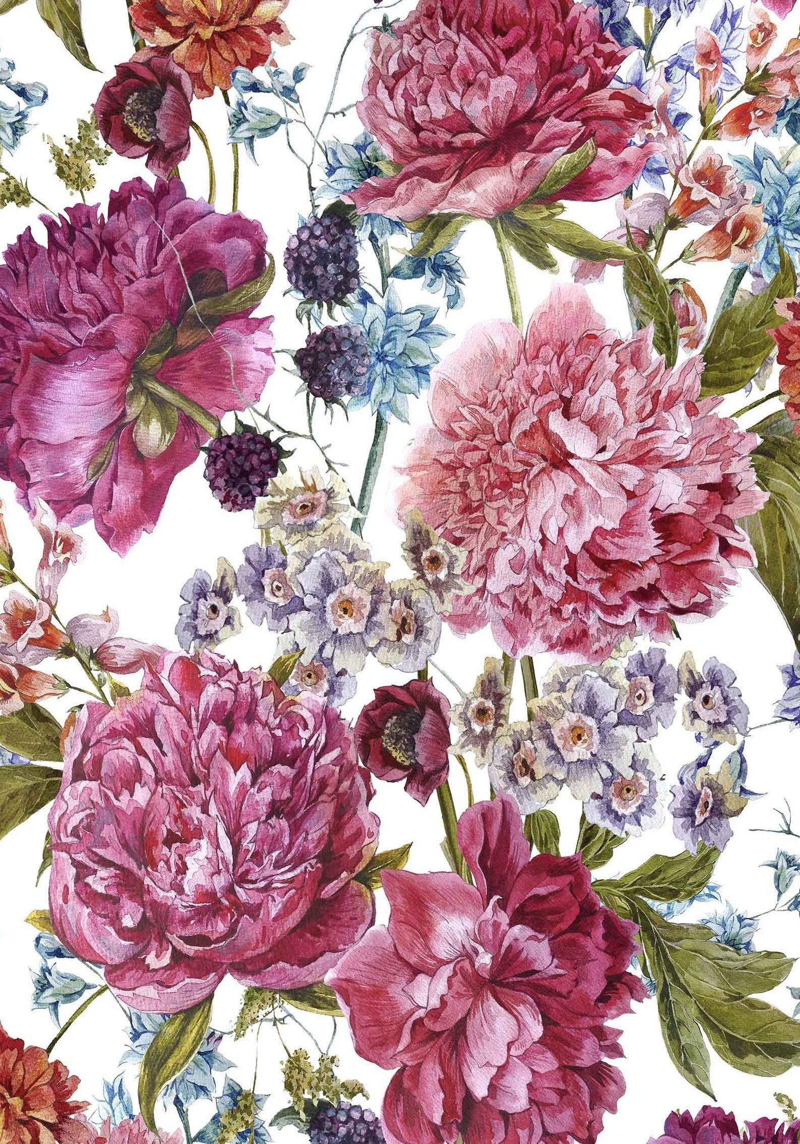 Peony Wallpaper 60 Images