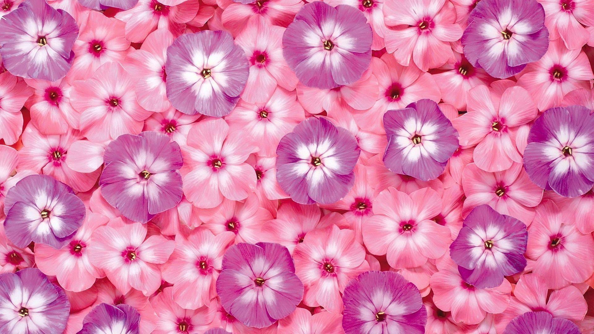 Pink Desktop Backgrounds 53 Images