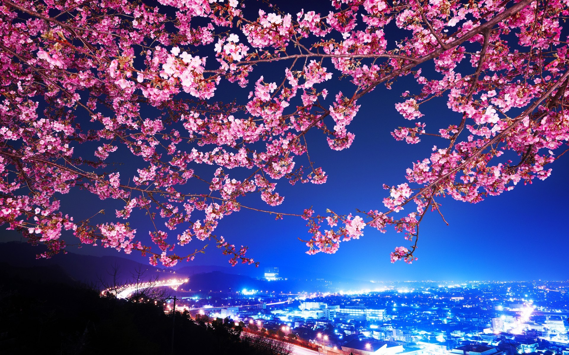 1920x1200 Mimura Japan Sakura Cherry blossom Highway City night trees flowers  blossoms wallpaper |  | 29788 | WallpaperUP