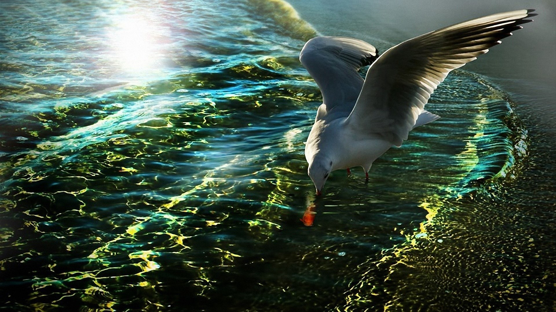 1920x1080 seagull background wallpaper free, Godric Nail 2017-03-05