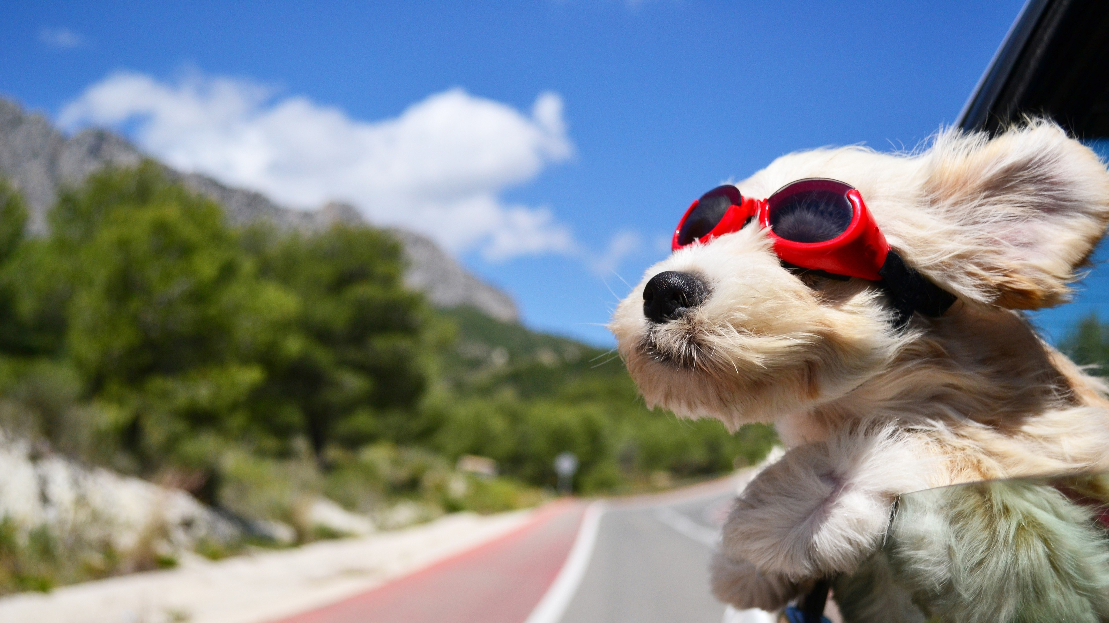 3840x2160 Preview wallpaper dog, face, wind, glasses