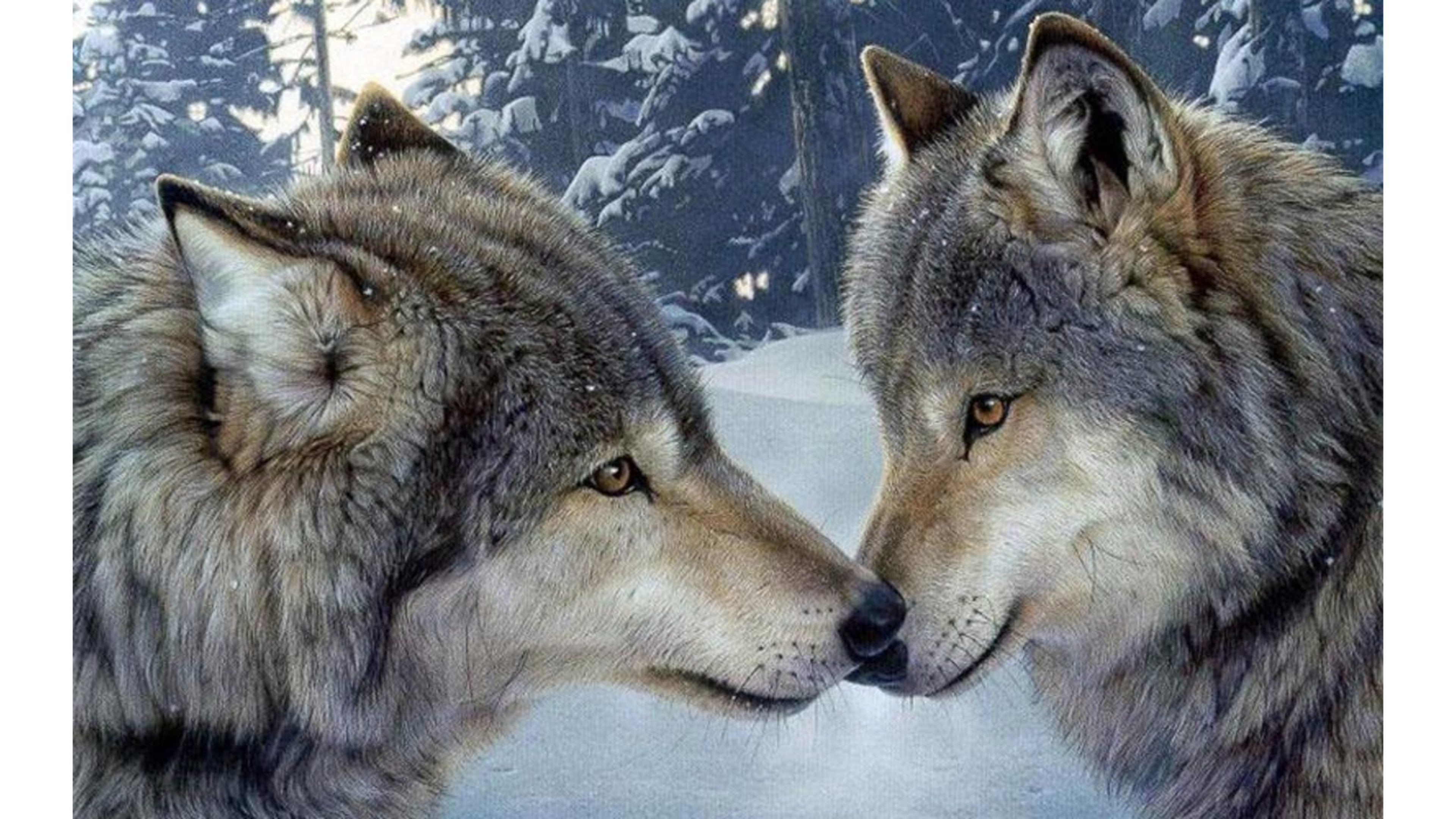 3840x2160 Wolf Encounter Romance 4K Wallpaper