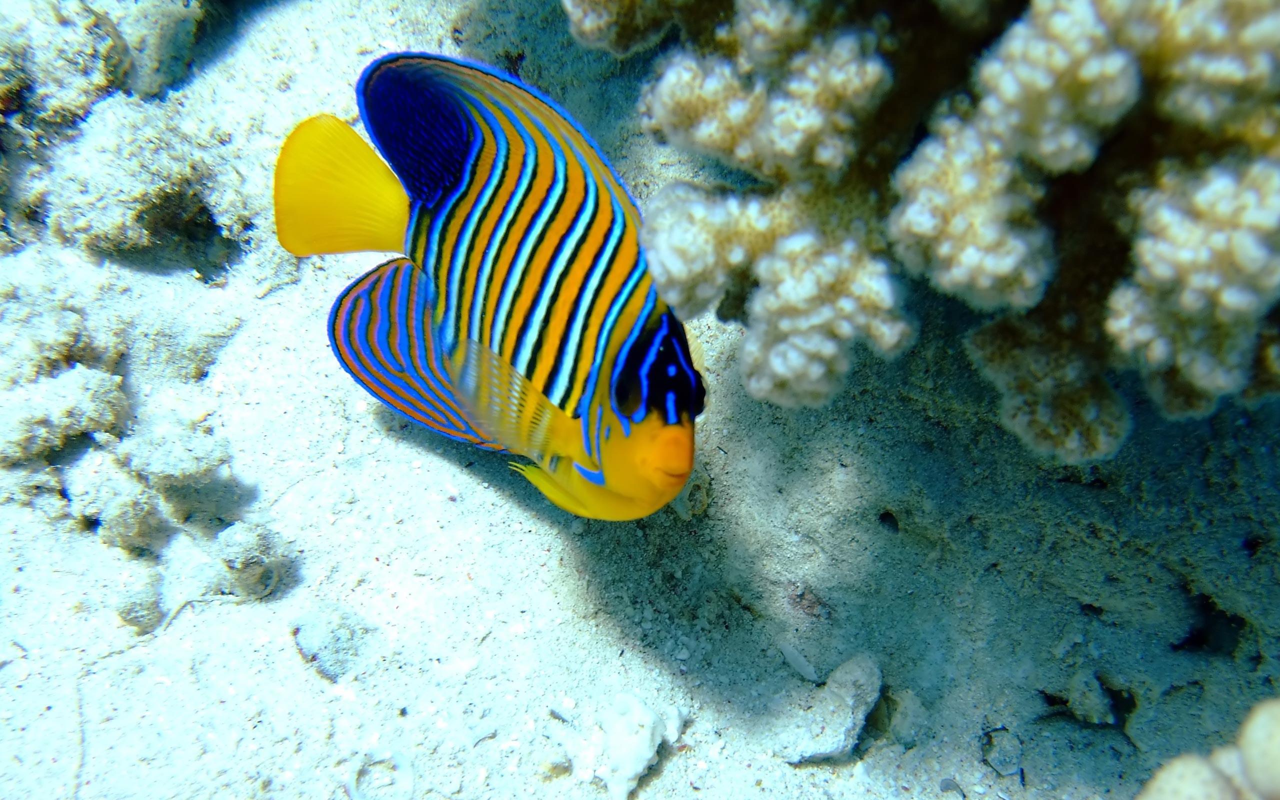 Ocean Animals Wallpaper 52 images