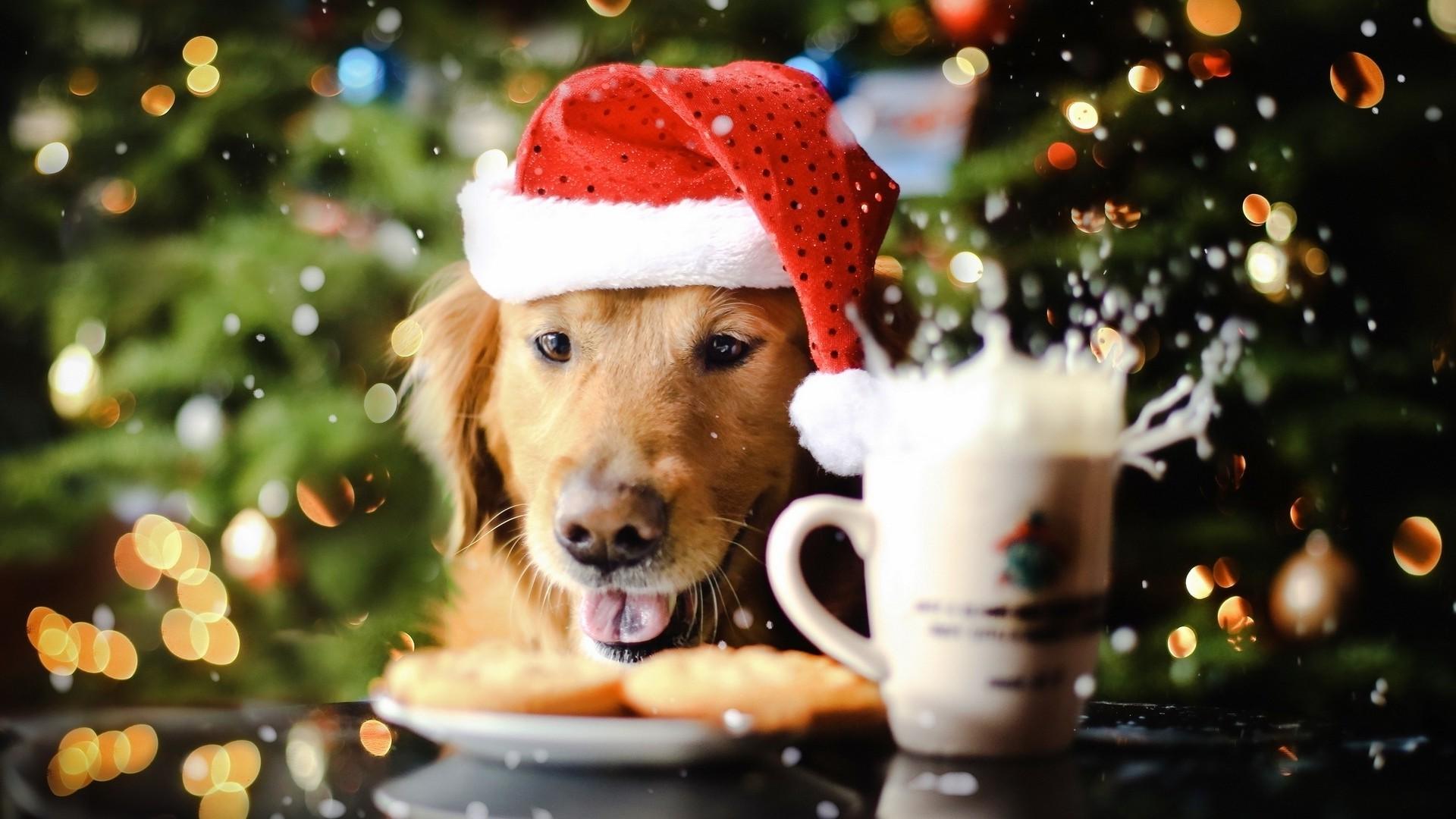 Christmas Animal Wallpaper (67+ images)