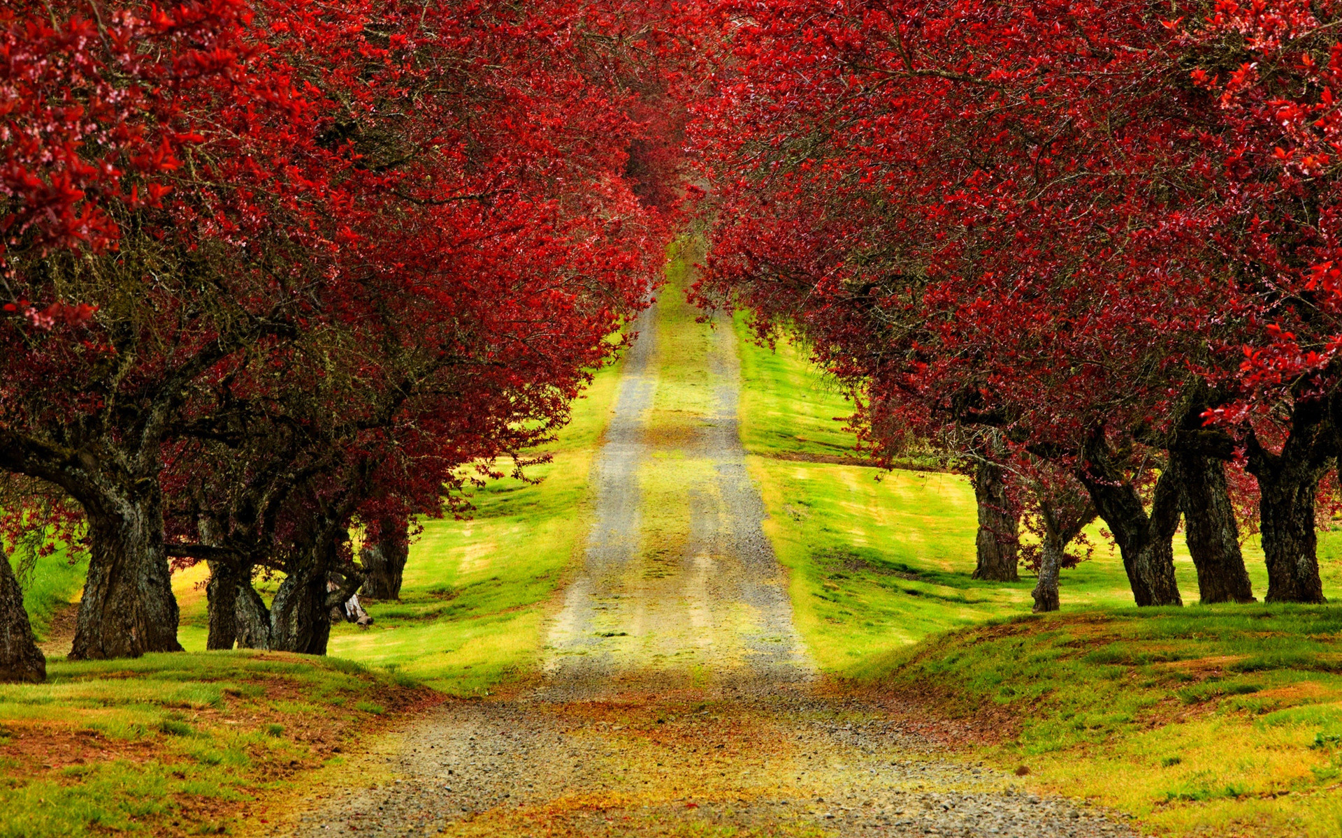 1920x1200 Red Trees Autumn Road Beautiful HD Wallpaper - HD Nature Wallpaper