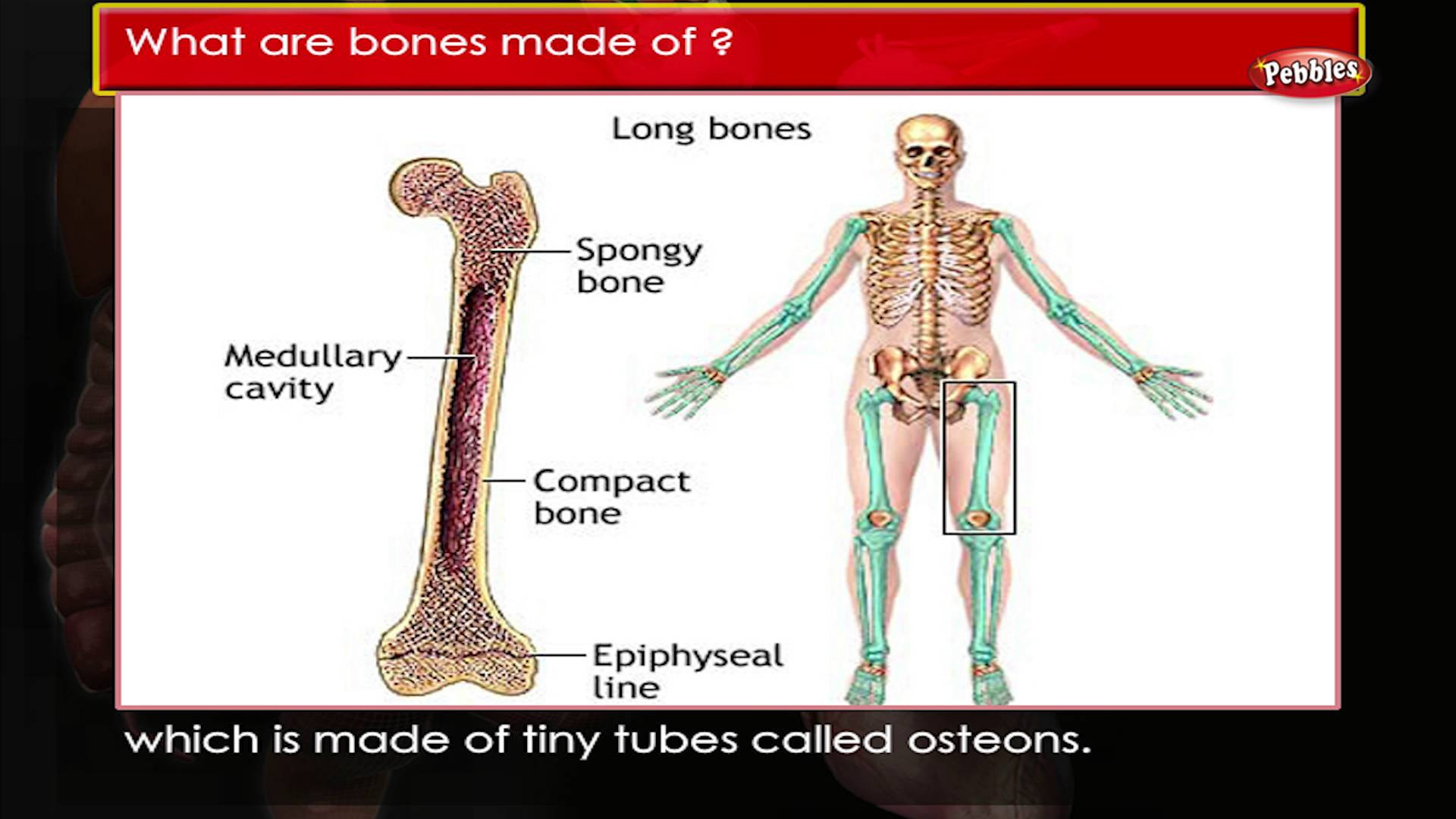 1920x1080 ... Man Body Bone Wallpaper Human Body Facts : Bones | Human Body Parts And  Functions ...