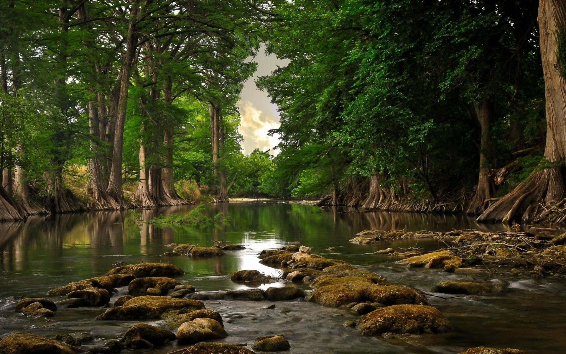 1920x1200 HD Landscape Wallpapers beautiful river in a forest River Nature Wallpapers  .