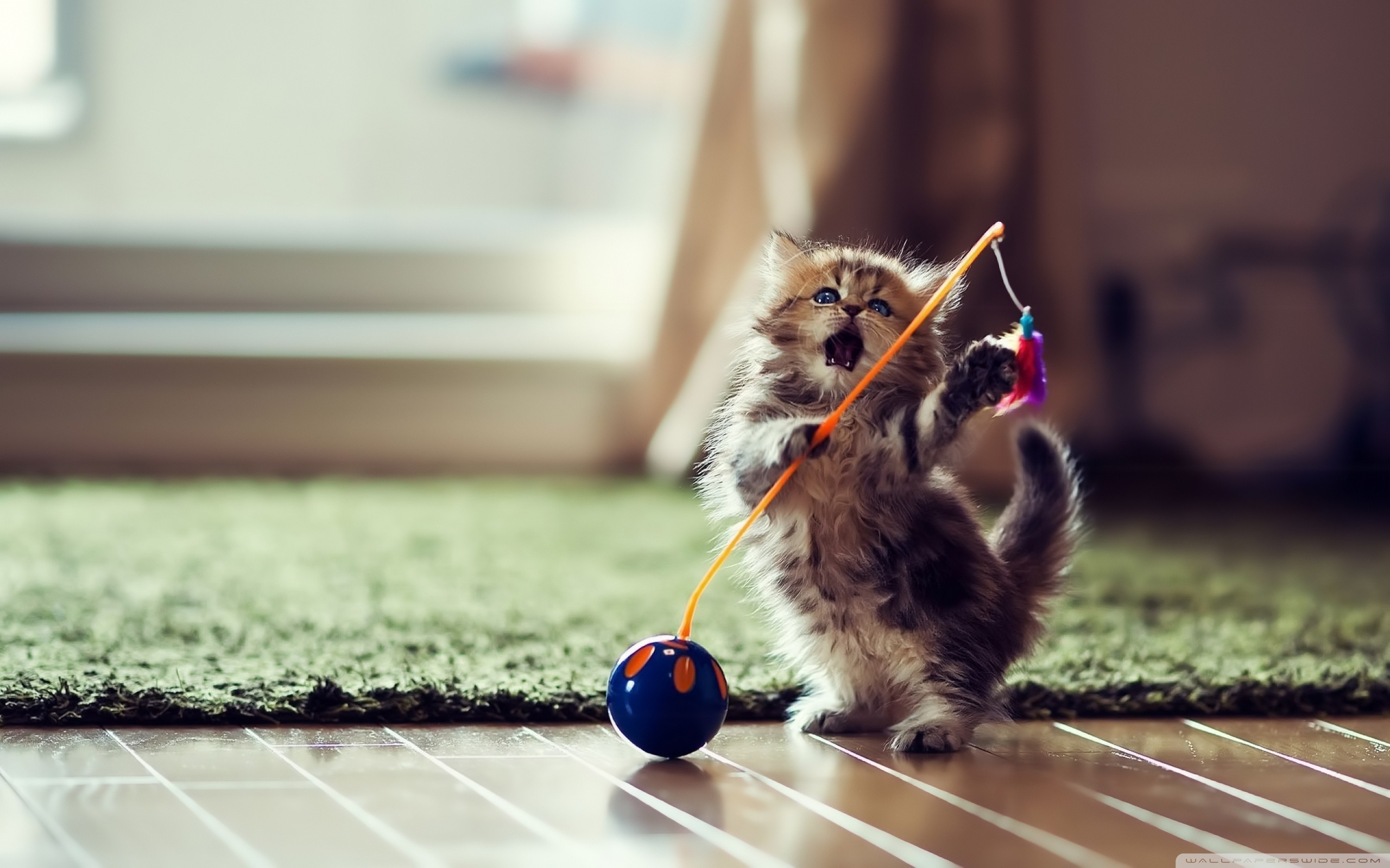 2560x1600 ... kittens wallpapers photos and desktop backgrounds for mobile up; dancer  cat hd desktop wallpaper high definition fullscreen ...