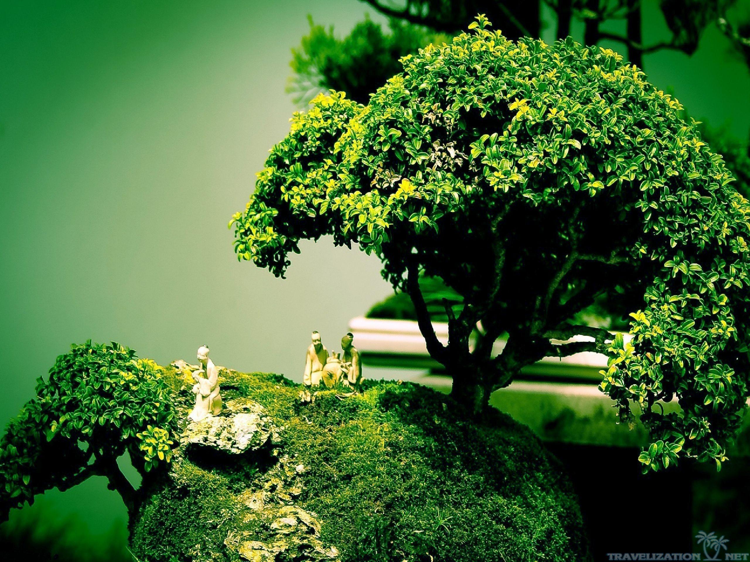 bonsai tree wallpaper 67 images