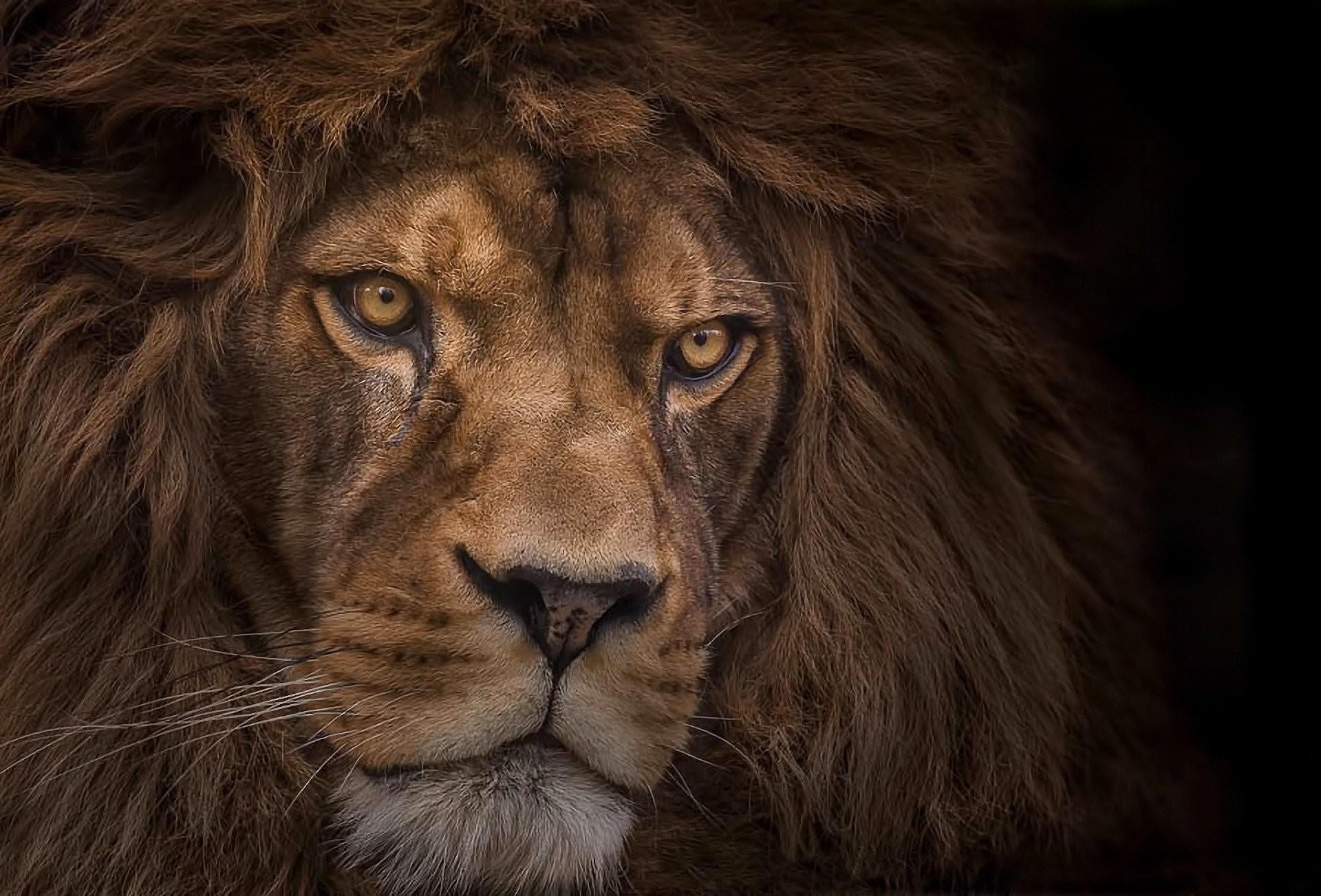 Intuitive Astrology: Leo Season 2019 - Forever Conscious