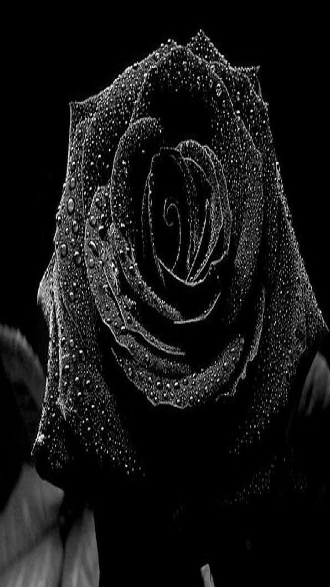 Black Roses Wallpaper (64+ images)