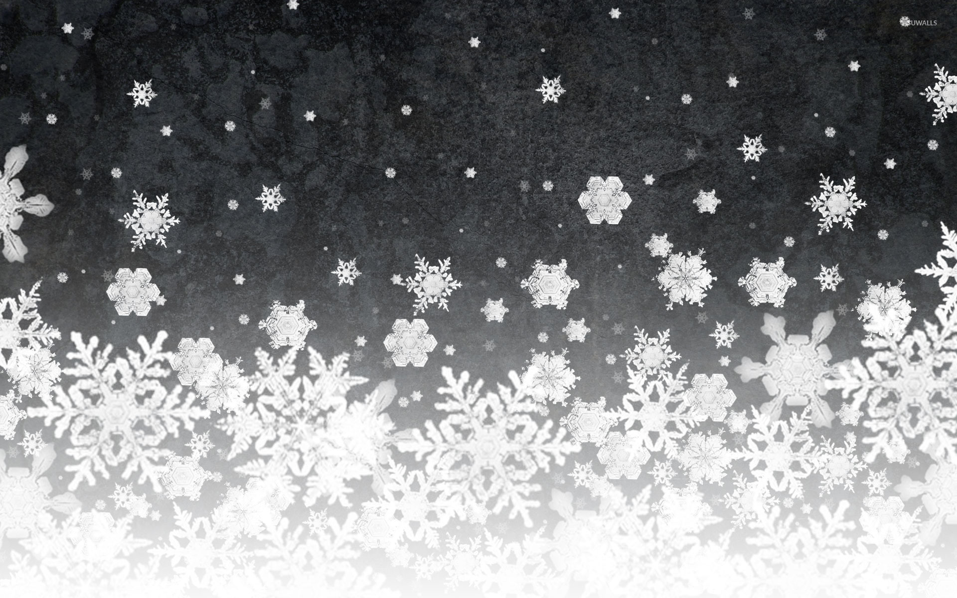 Photo of blue snowflake decorations | Free christmas images |Real Snowflakes Background