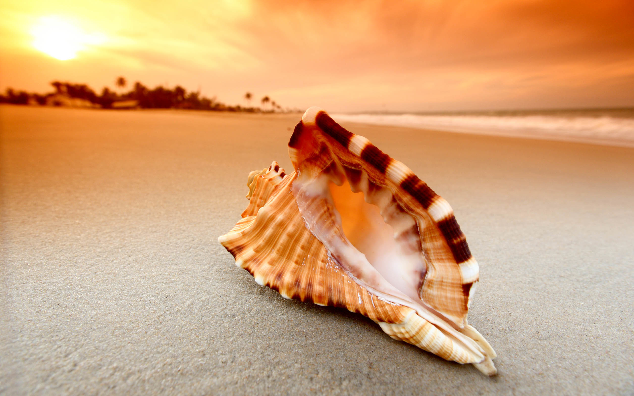 2560x1600 Shell Awesome HD Wallpapers 2015 ..... Shell Wallpapers and Backgrounds and  download