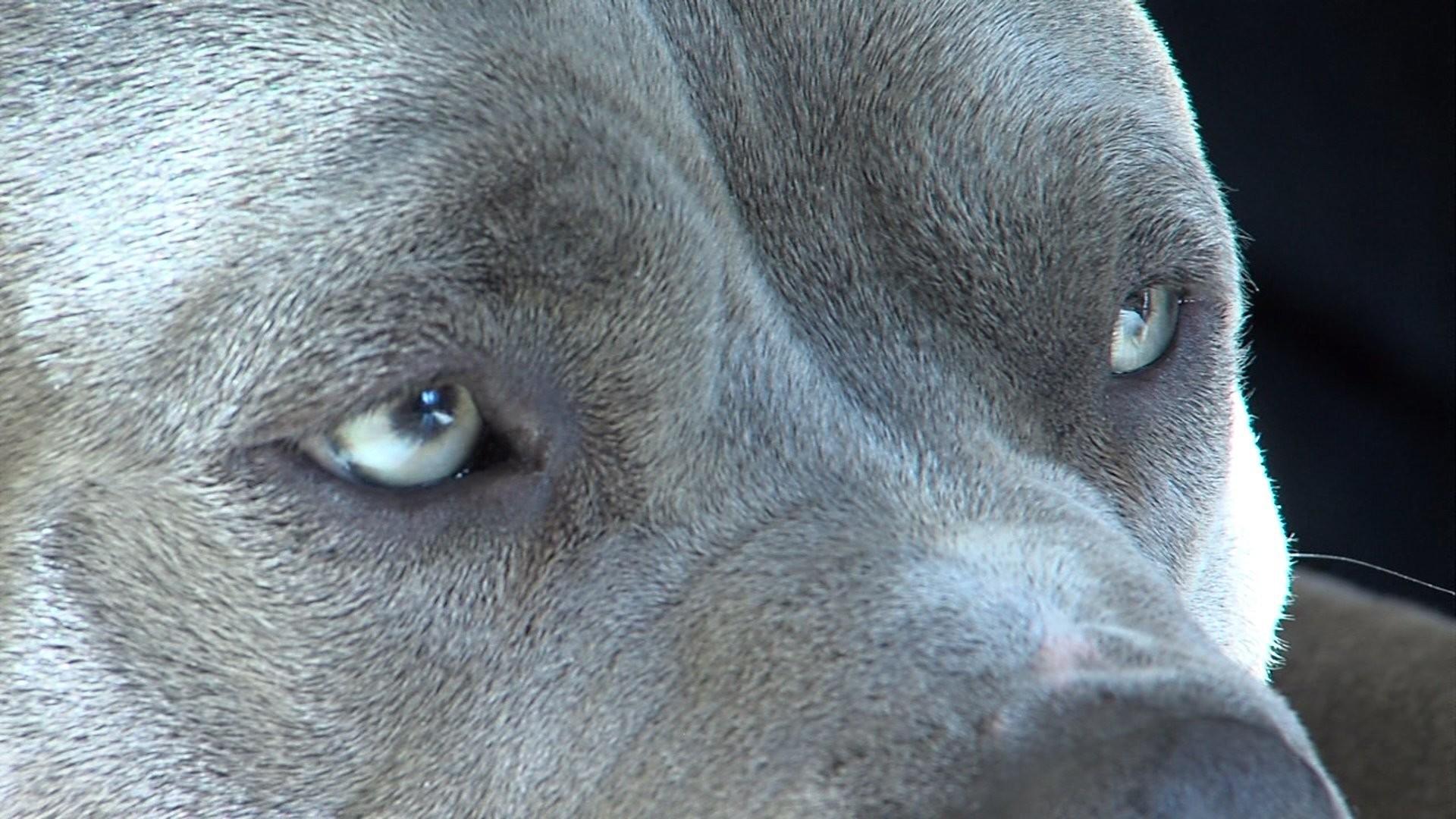 Light Blue Collar Dog