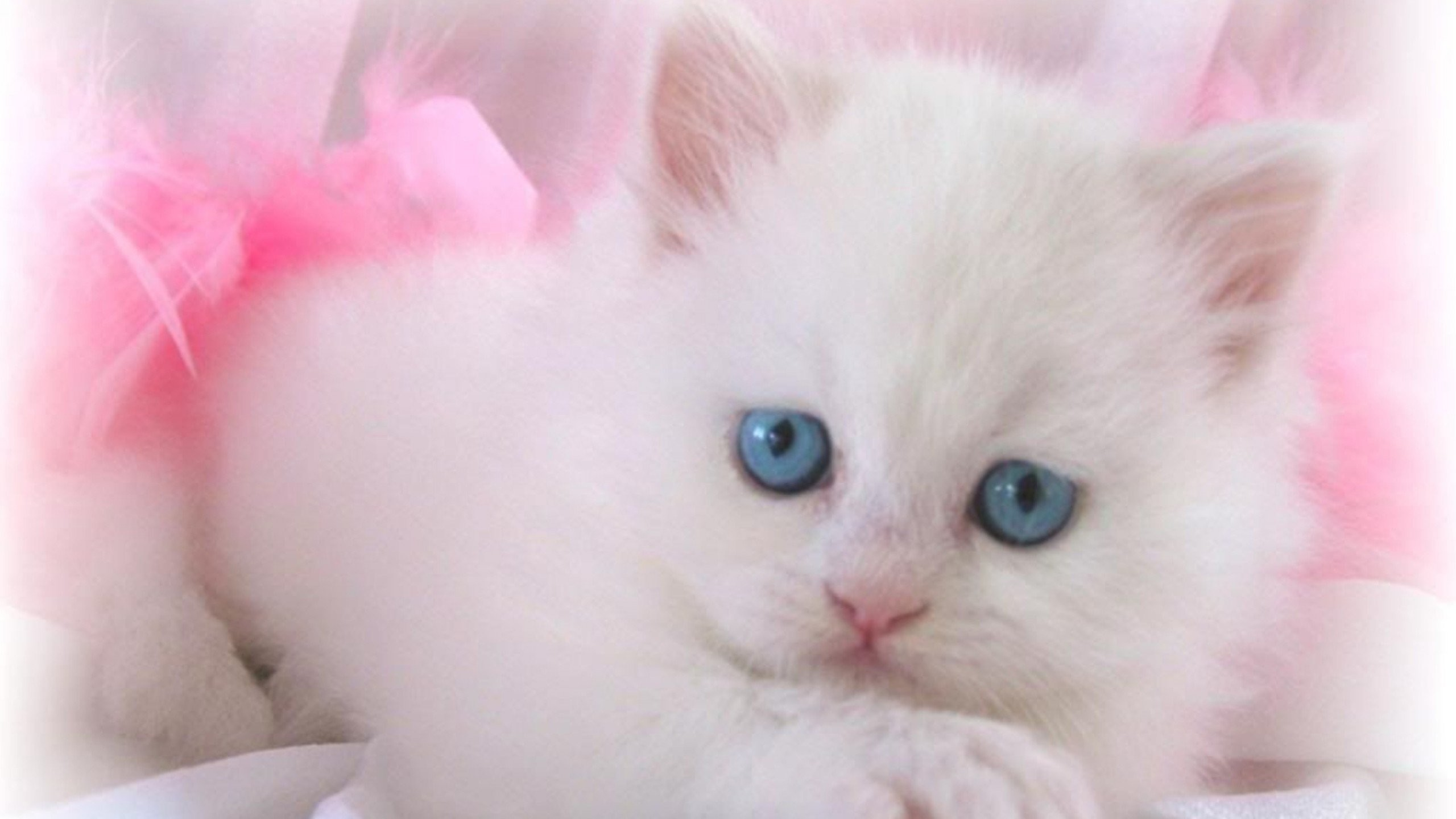 white cats wallpaper 75 images