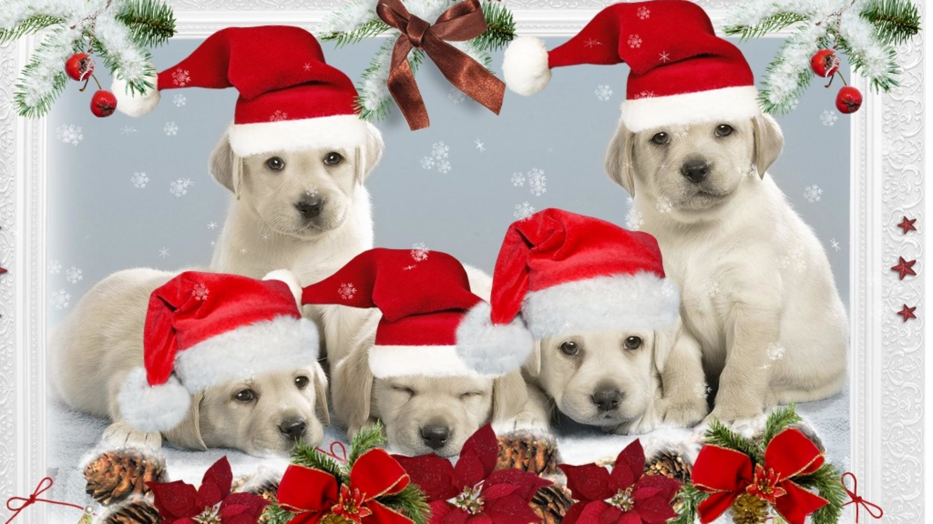 1920x1080 Puppy Christmas Wallpaper For Desktop : Christmas dog computer wallpaper  picture wallpapersafari