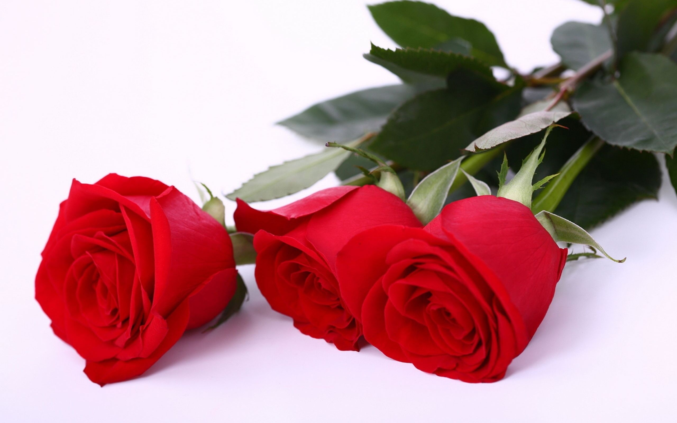 1900x2361 Tablet Awesome Earth Transparent Red Rose Tumblr Wallpapers Desktop Phone Single Png