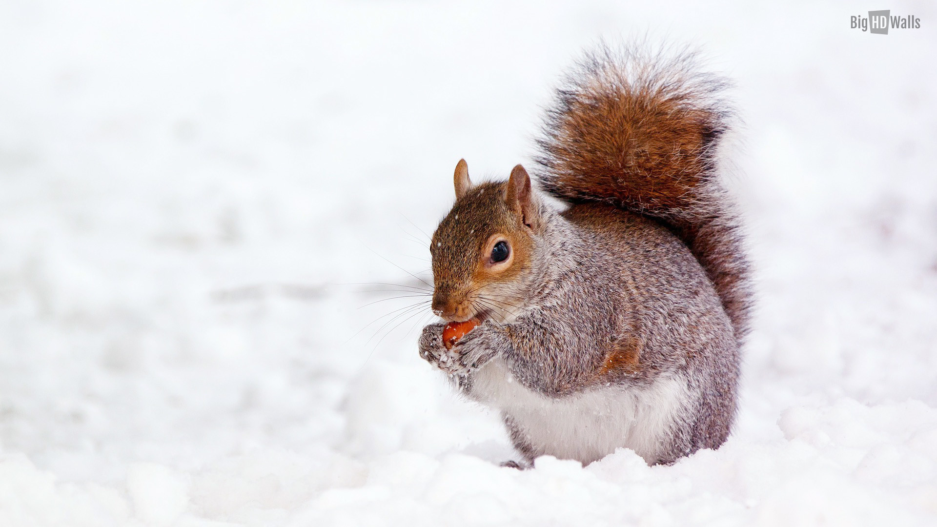 Cute Winter Animal Wallpaper 48 Images