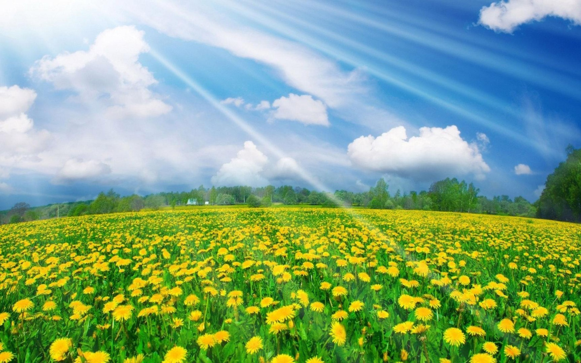 Spring Nature Images Wallpaper 63 Images