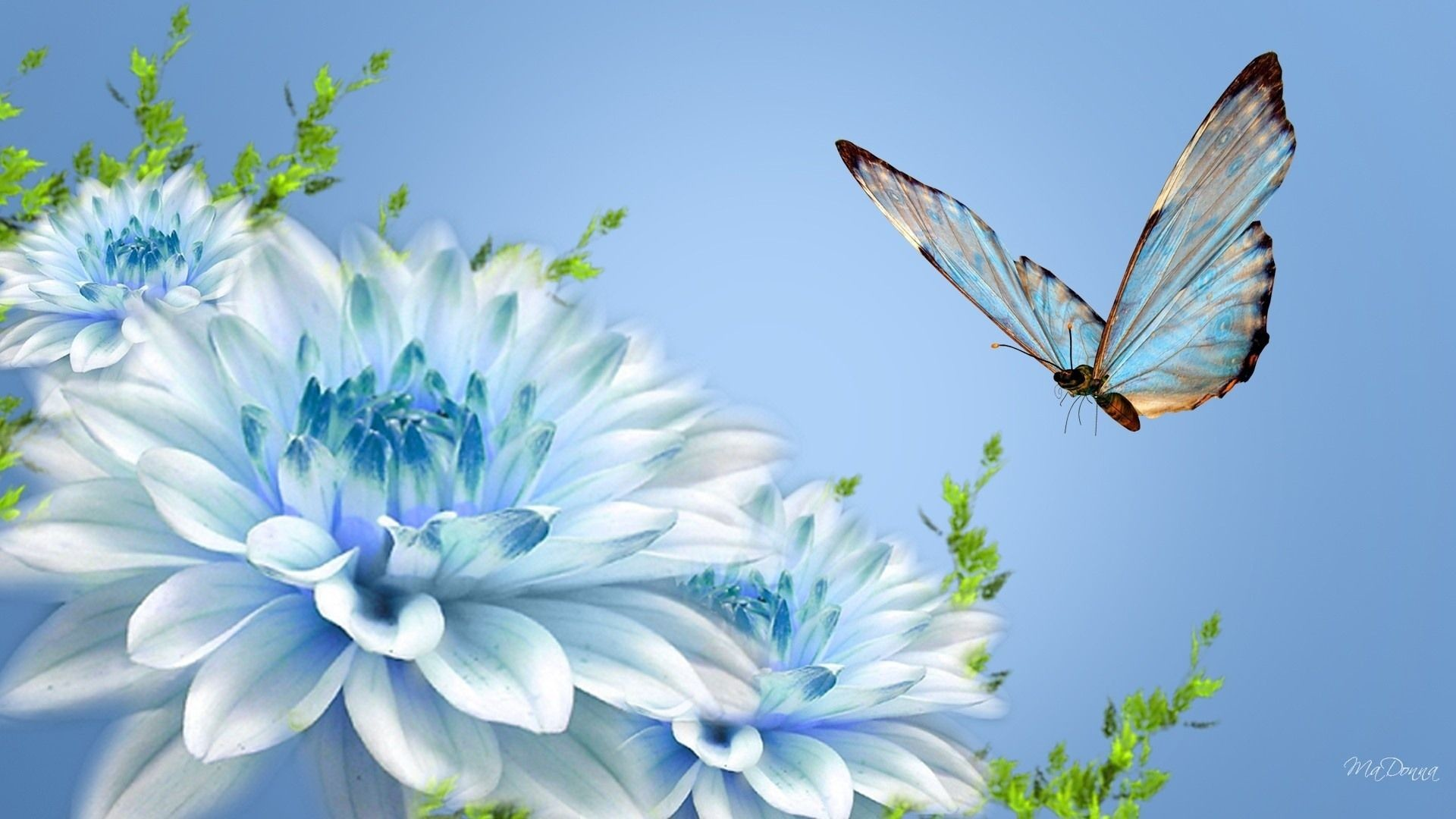 1920x1080 ... Beautiful Butterfly Wallpapers Group (74 ) ...