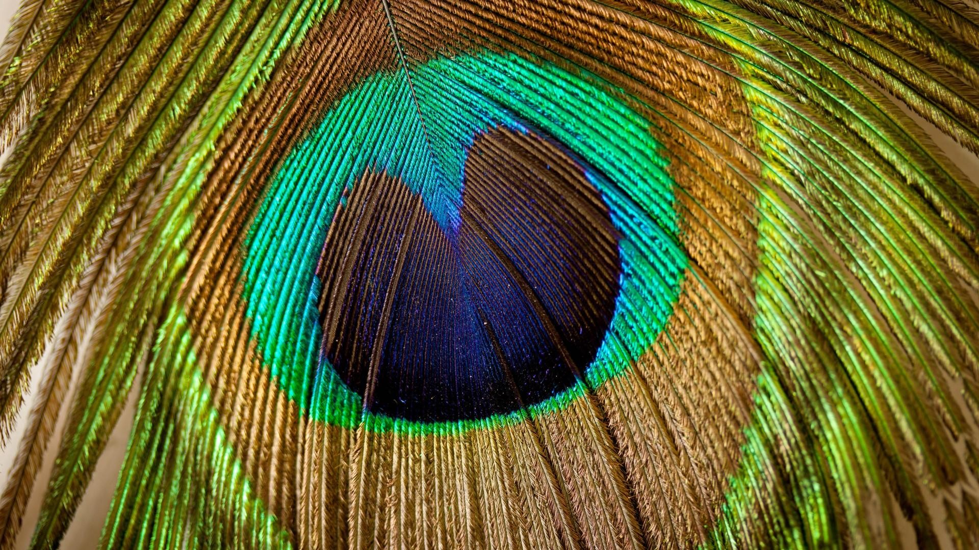 1920x1080 free peacock feathers picture hd wallpapers background photos mac  wallpapers amazing artworks best wallpaper ever wallpaper for iphone free  1920×1080 ...