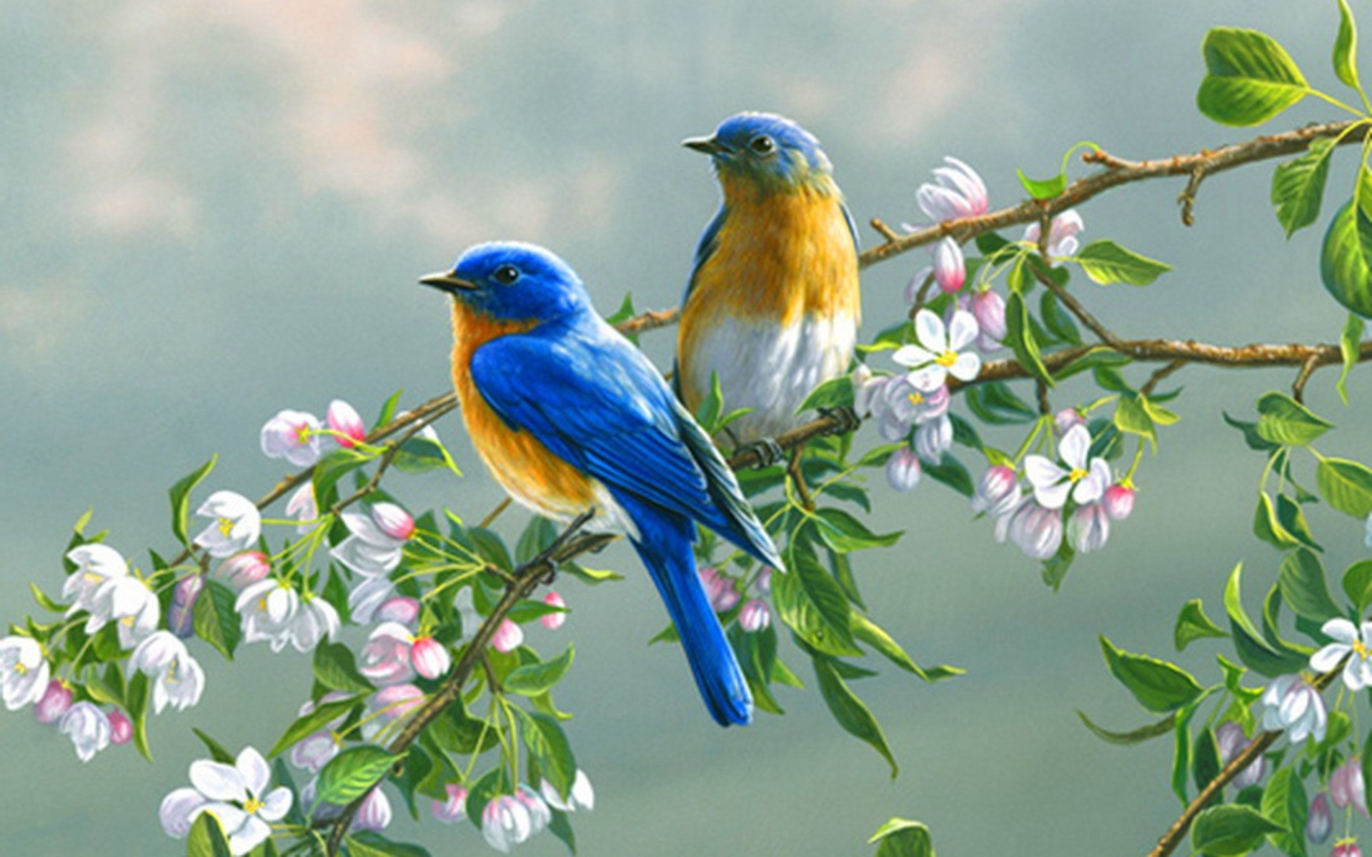 wallpaper birds and flowers (61+ images)