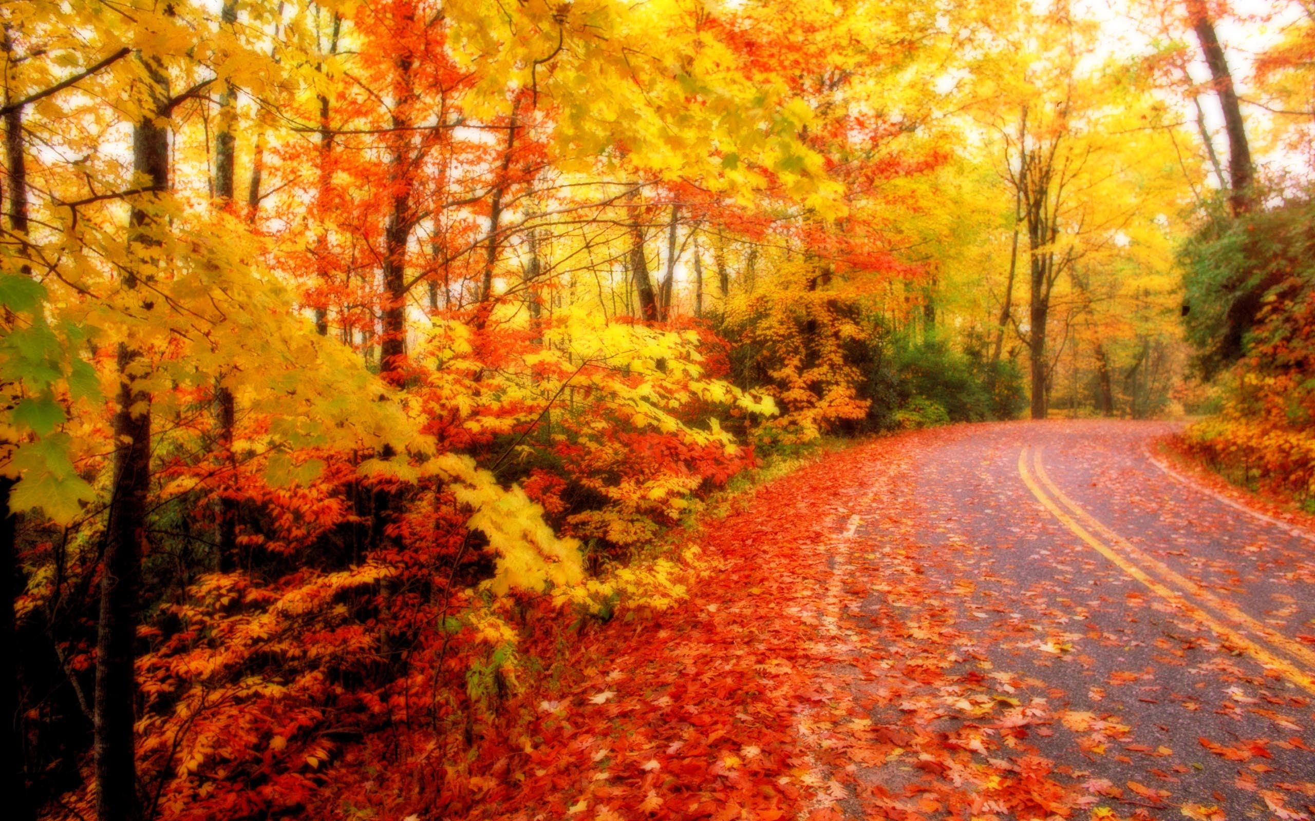 2560x1600 Free Desktop Wallpaper Autumn Leaves. autumn leaves