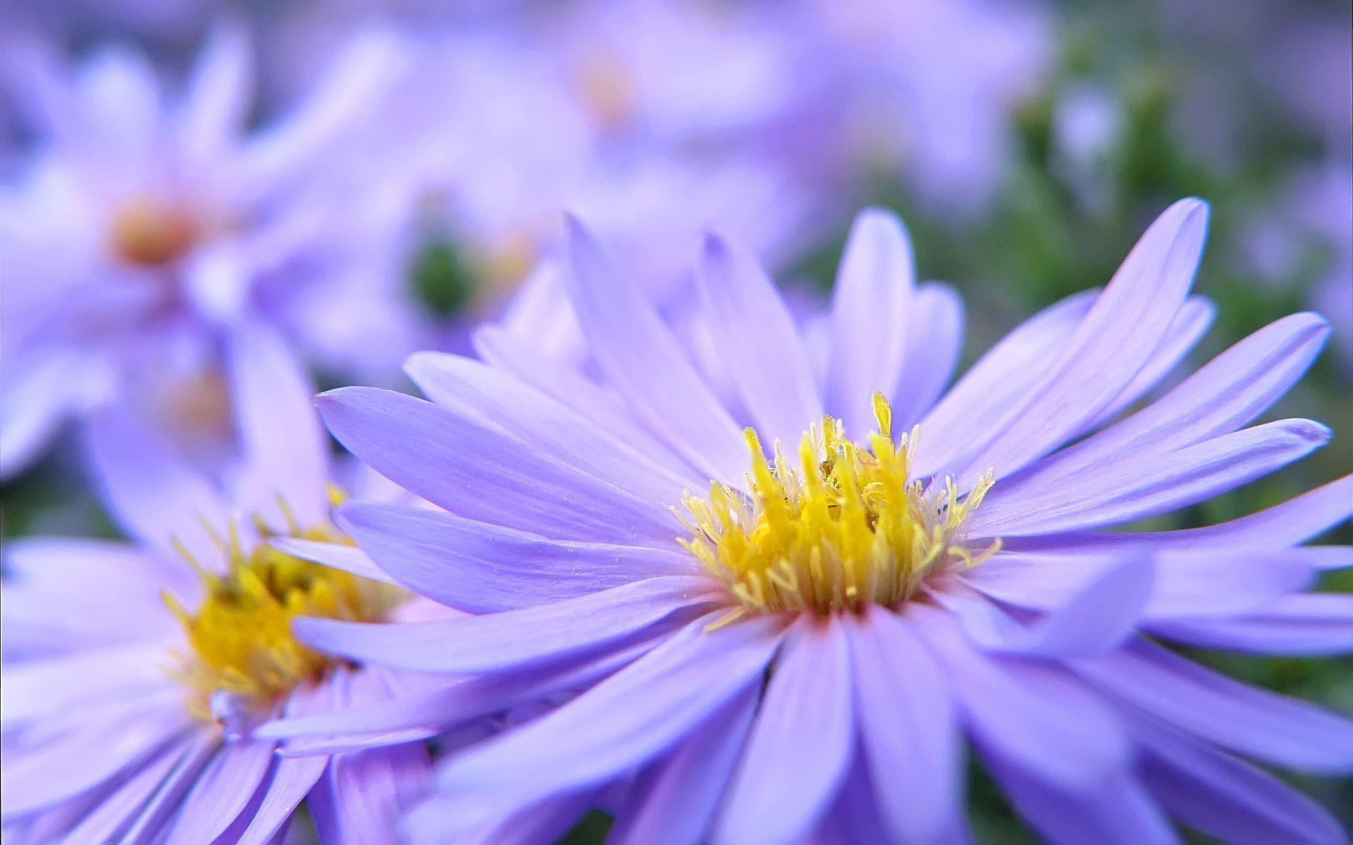 Pretty flower wallpaper 49 images 1920x1440 beautiful flowers mightylinksfo