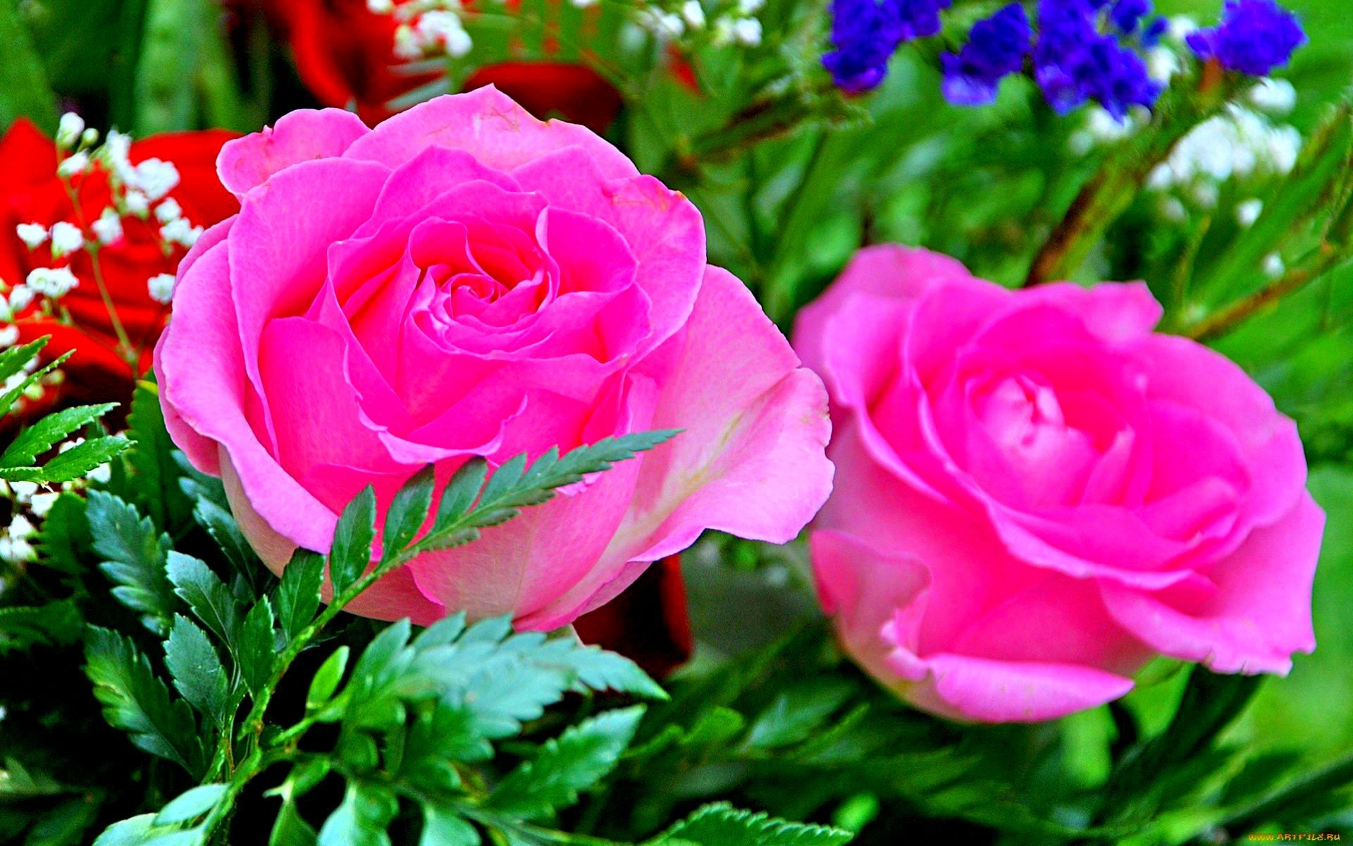 Pictures Of Roses Flowers Wallpapers 59 Images