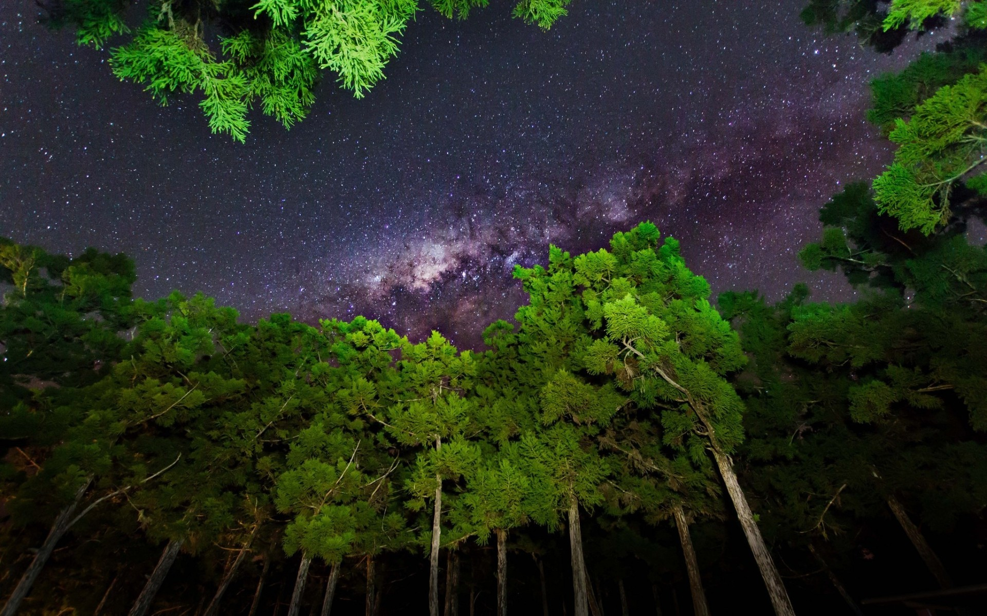 1920x1198 sky, Forest, Stars, Milky Way Wallpapers HD / Desktop and Mobile Backgrounds