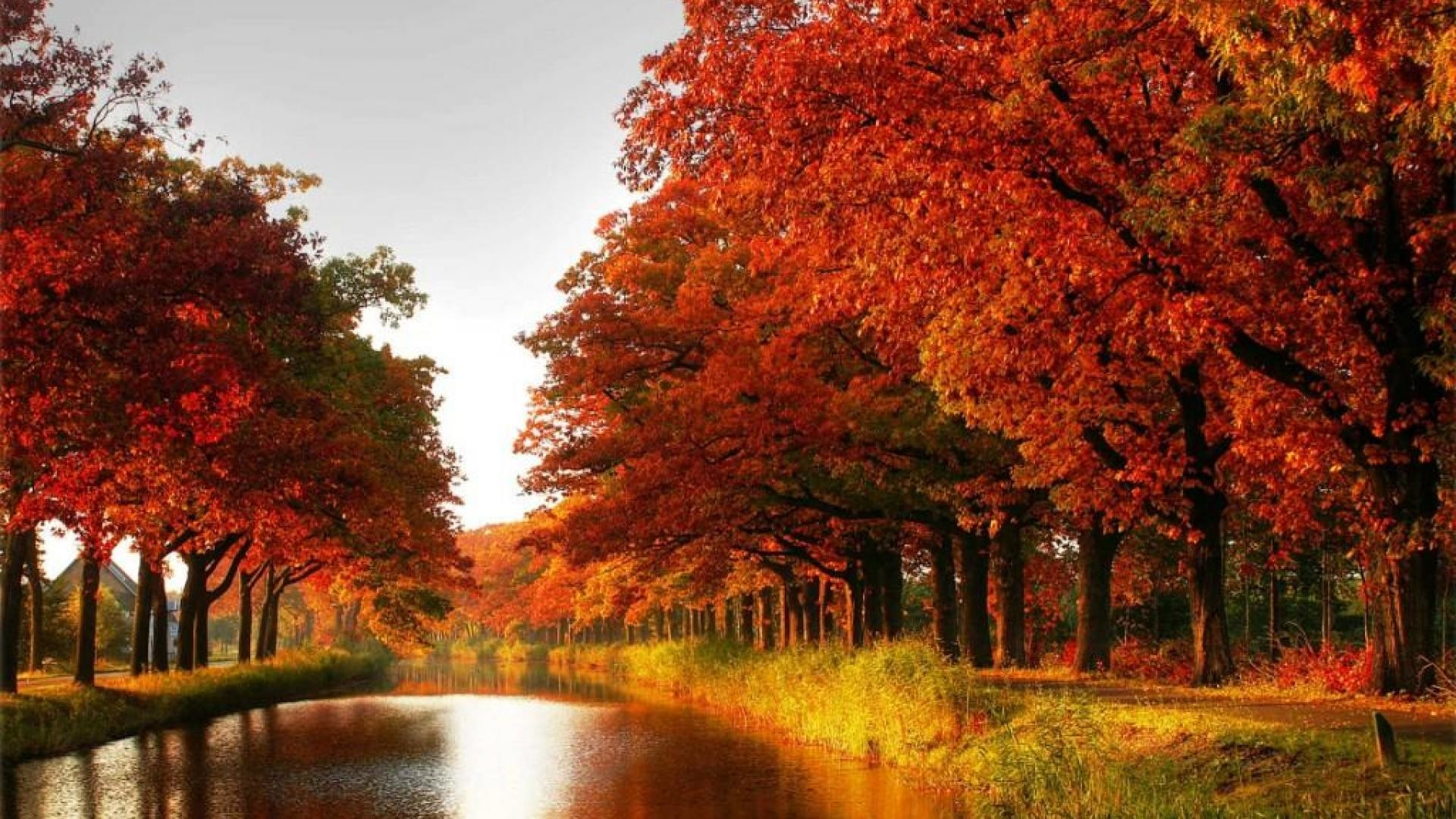 1920x1080 Maple trees autumn red leaves canal river forest [] Need #iPhone  #6S #Plus #Wallpaper/ #Background for #IPhone6SPlus? Follow iPhone 6S Plu…