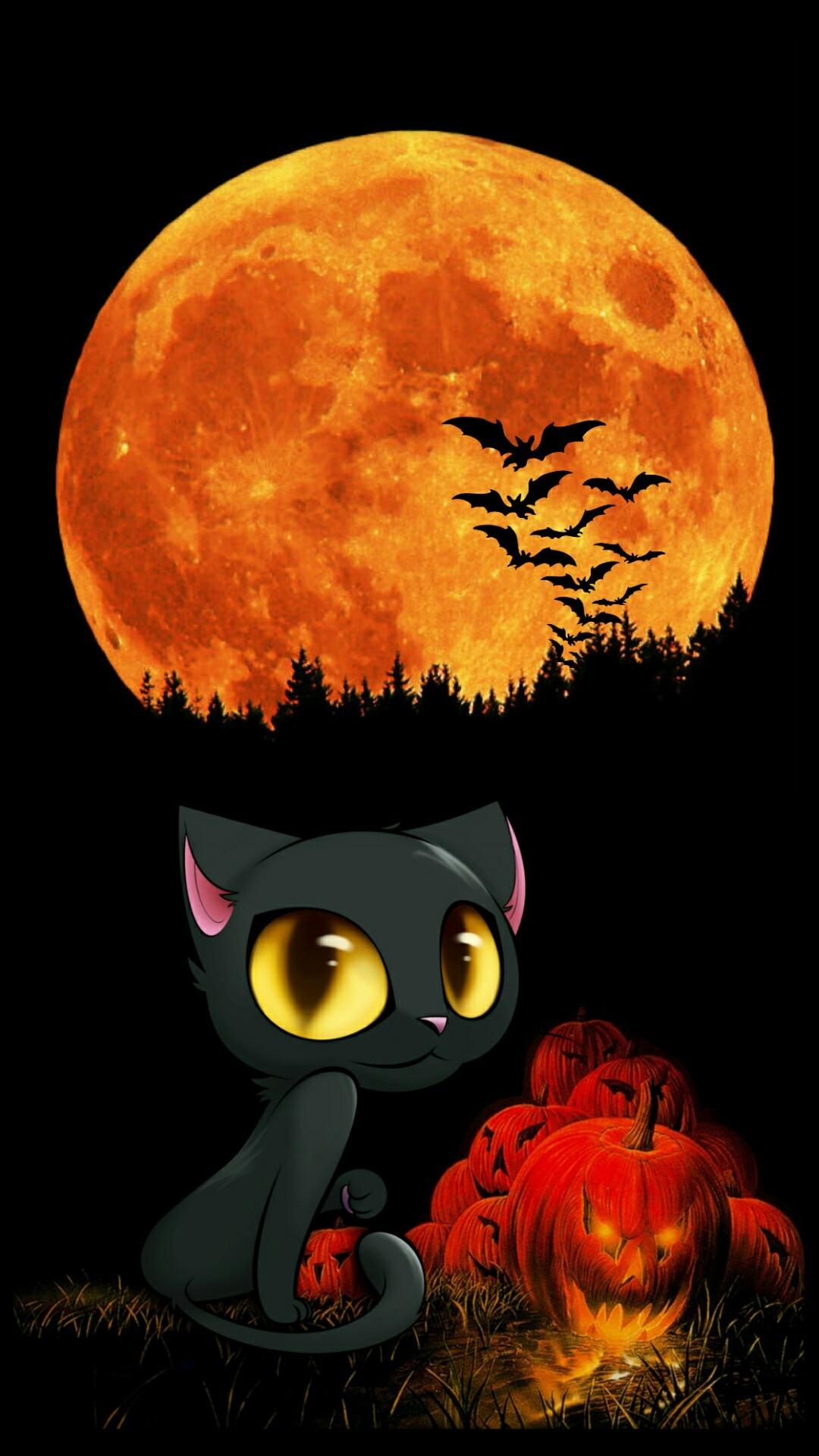 black cat halloween wallpaper  51  images