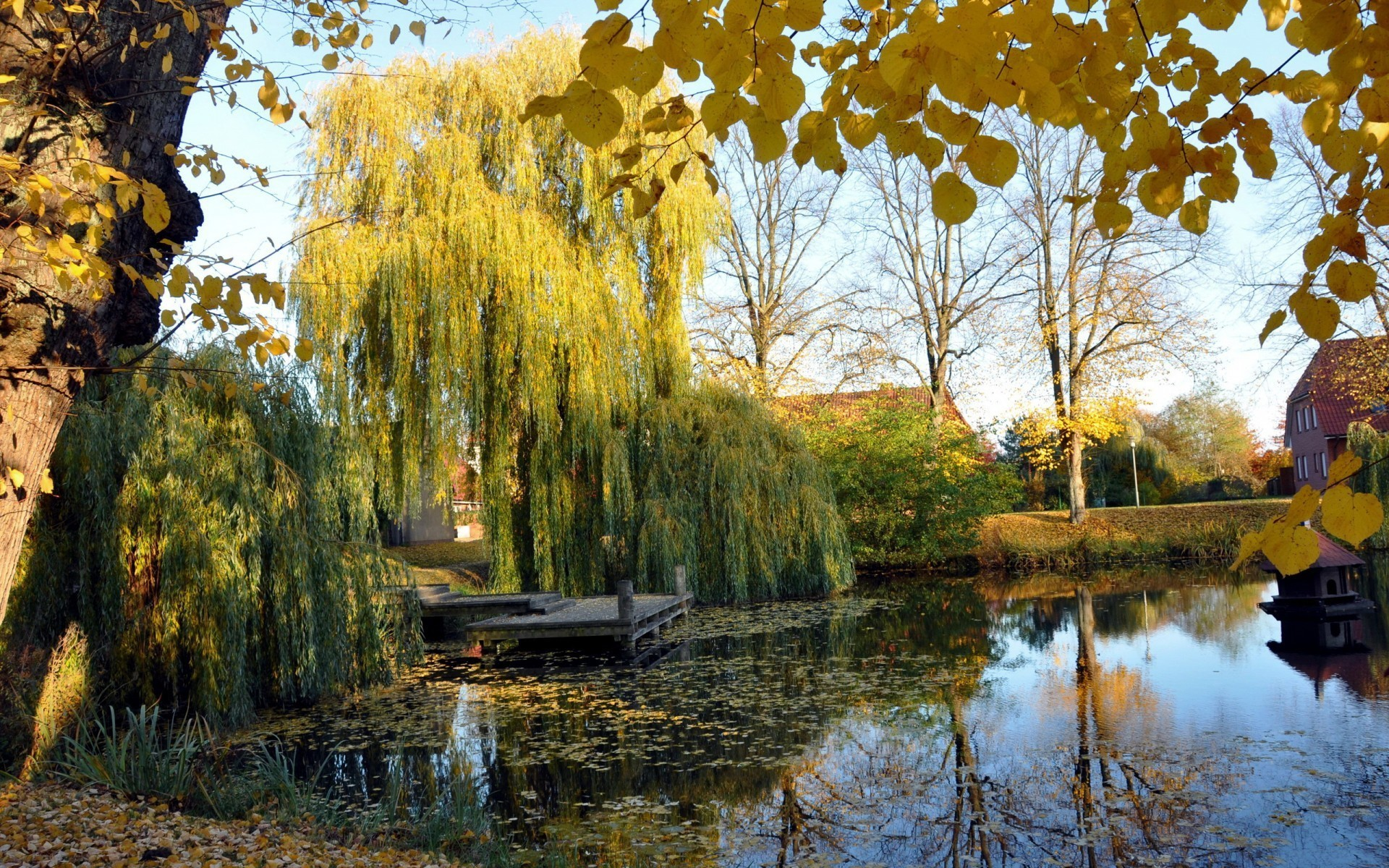 Weeping Willow Wallpaper 46 Images