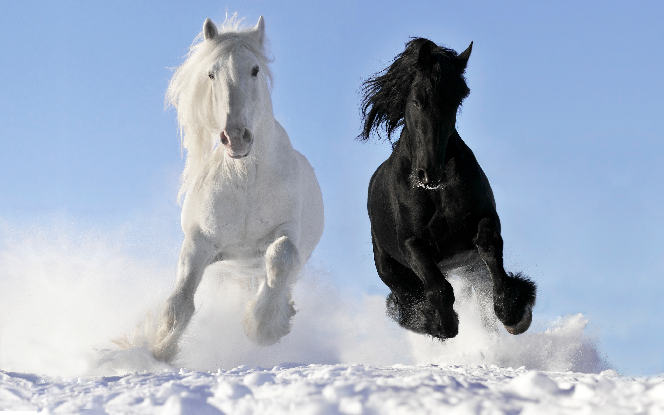 White Horse Wallpaper 68 Images