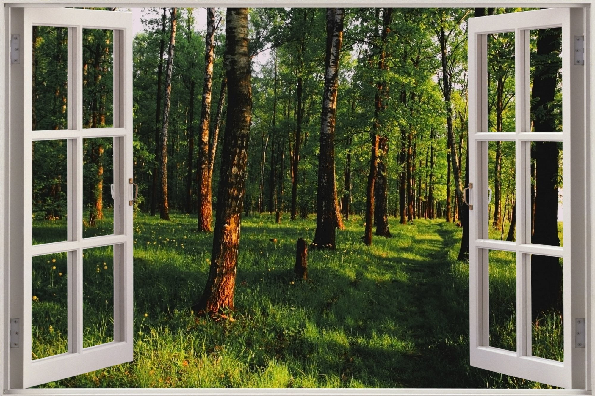 Enchanted Forest Wallpaper For Home 52 Images
