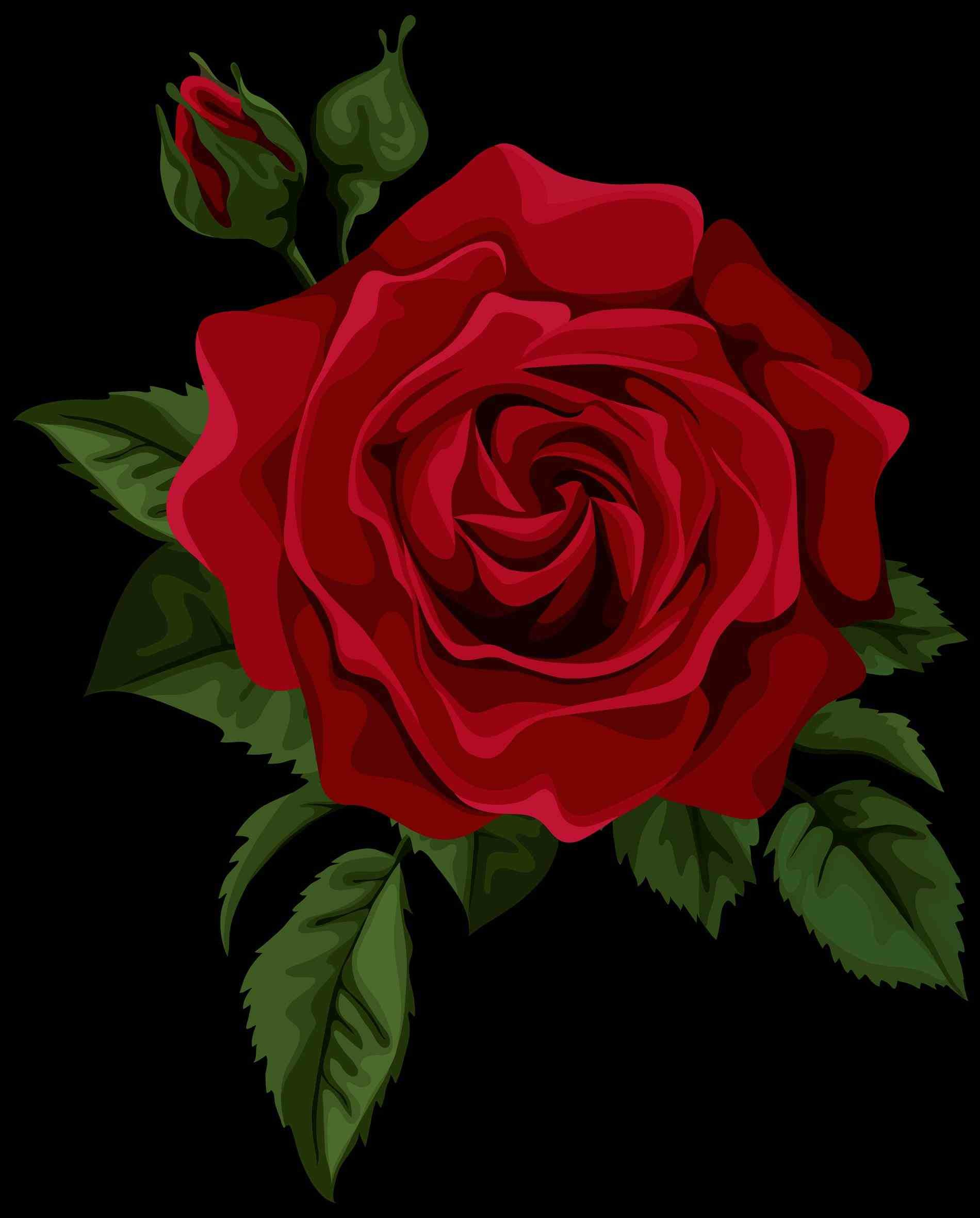 1900x2361 Tablet awesome earth transparent red rose tumblr rose wallpapers desktop  phone tablet awesome single red png .