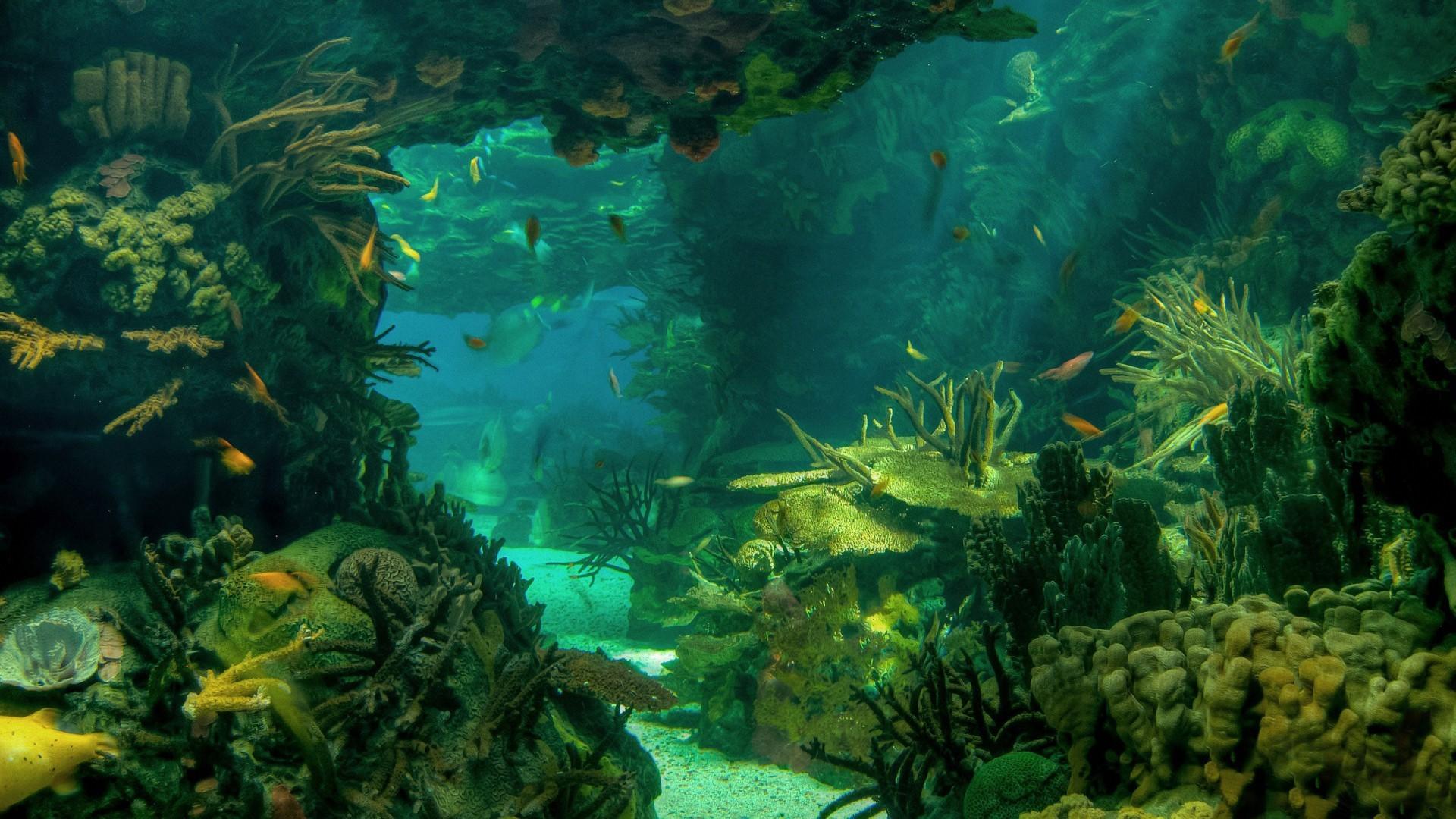 Undersea Wallpapers for Desktop (69+ images)